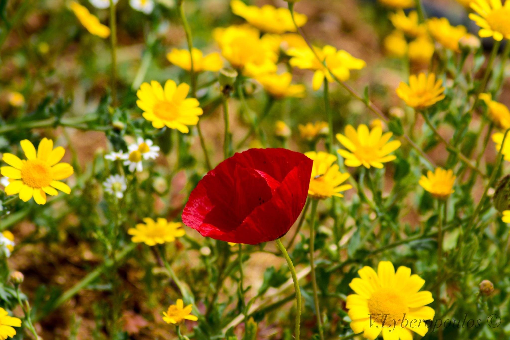 Flower  by VL.P