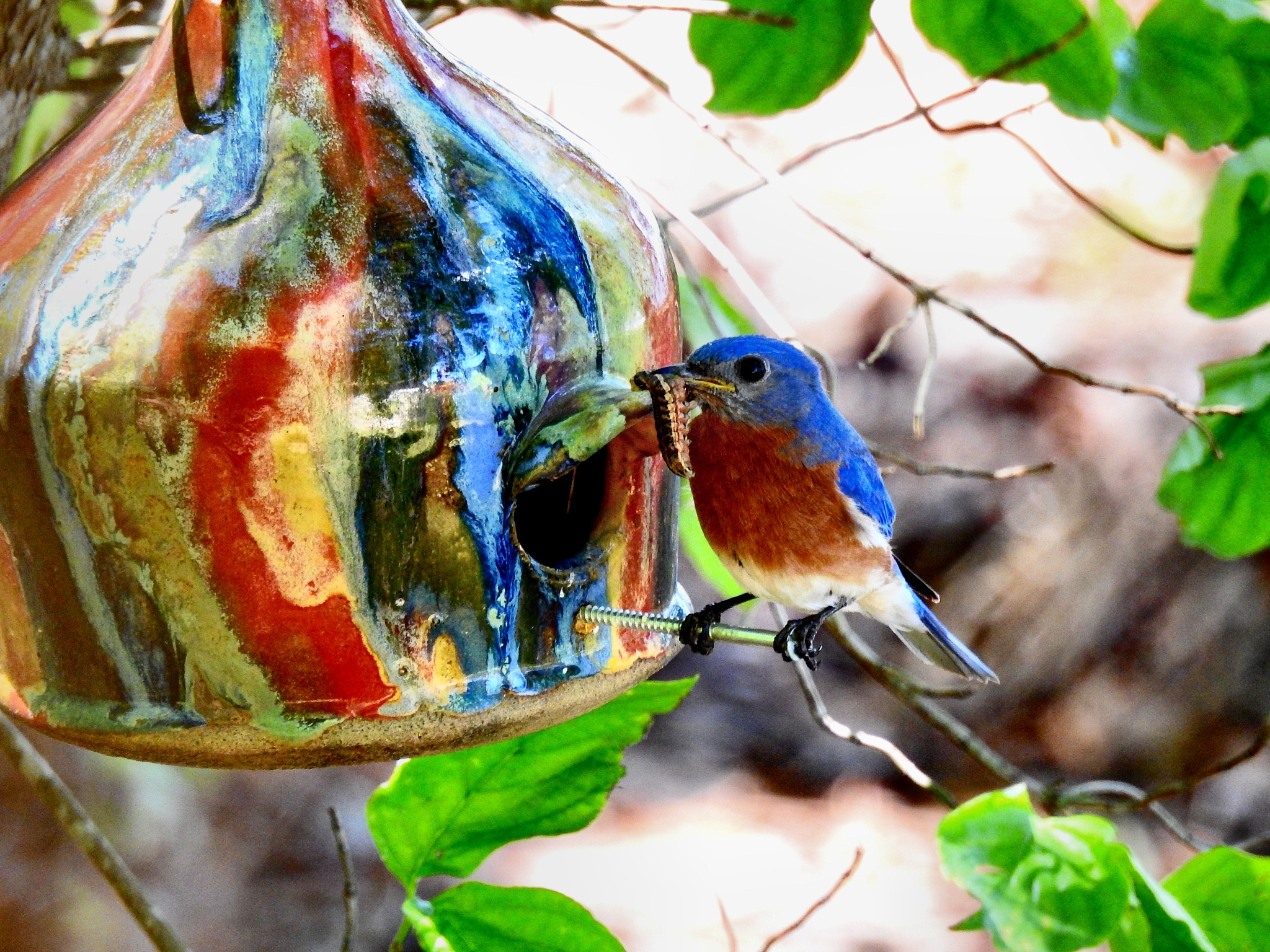 Daddy Bluebird by Patty Stockton