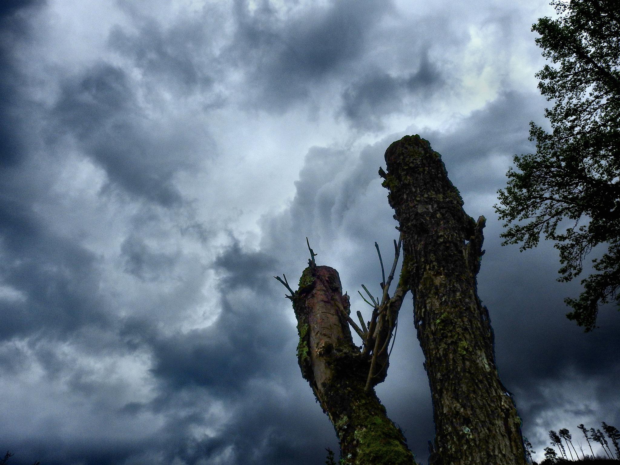Haunted Skies by Patty Stockton
