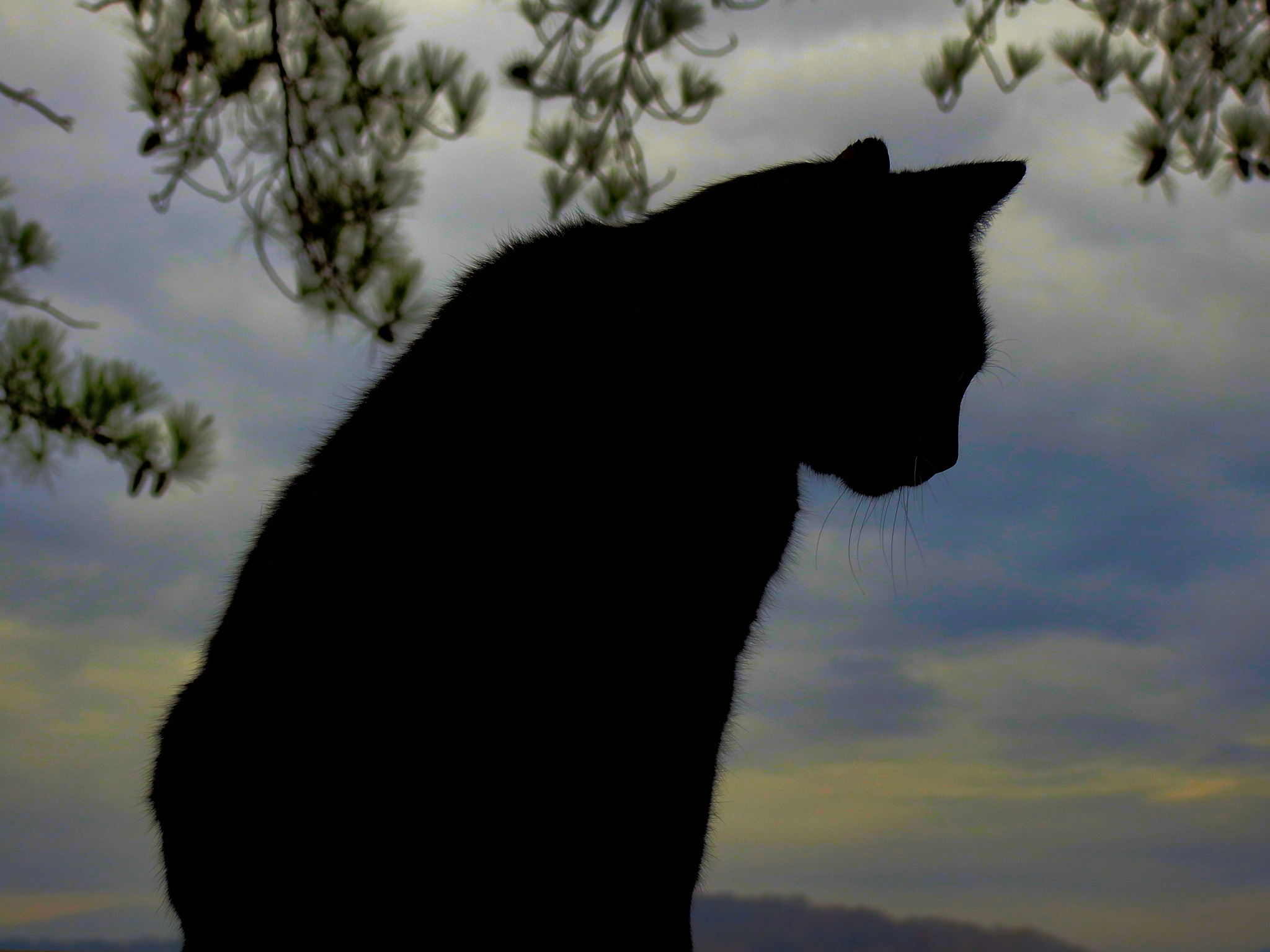 Cat Silhouette by Patty Stockton