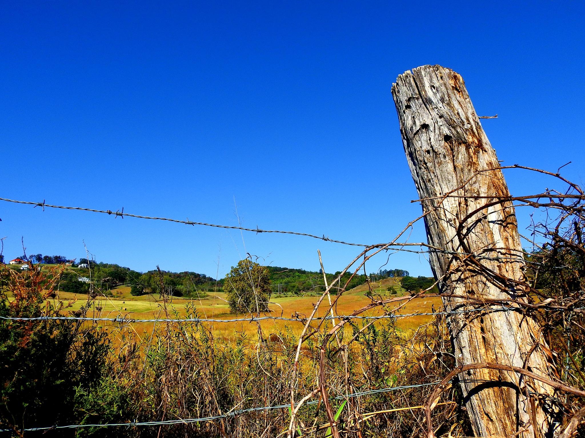 Farm Life by Patty Stockton