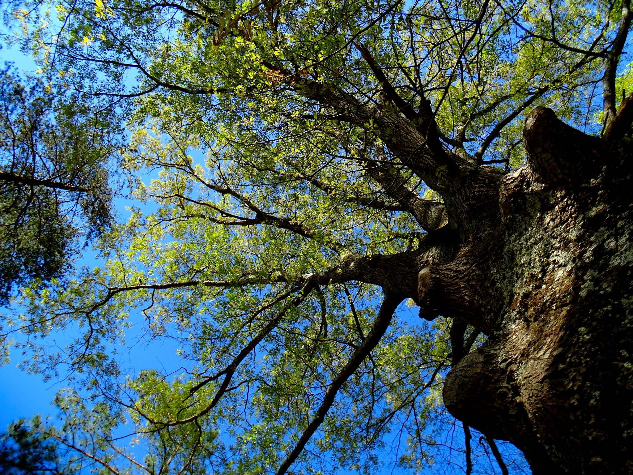Trees come back to life by Patty Stockton