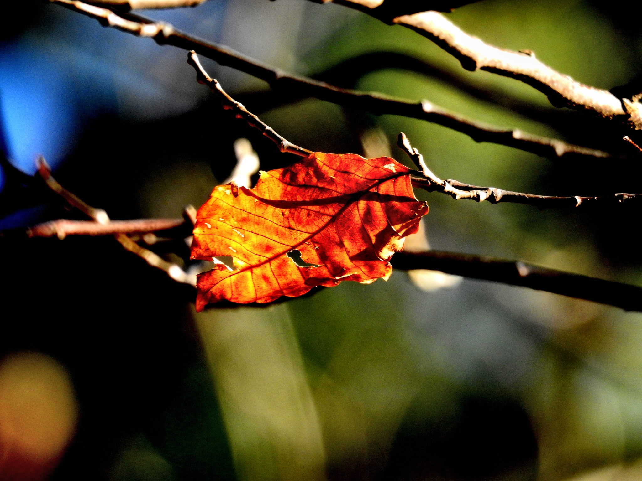 Leaf refusing to let go :) by Patty Stockton