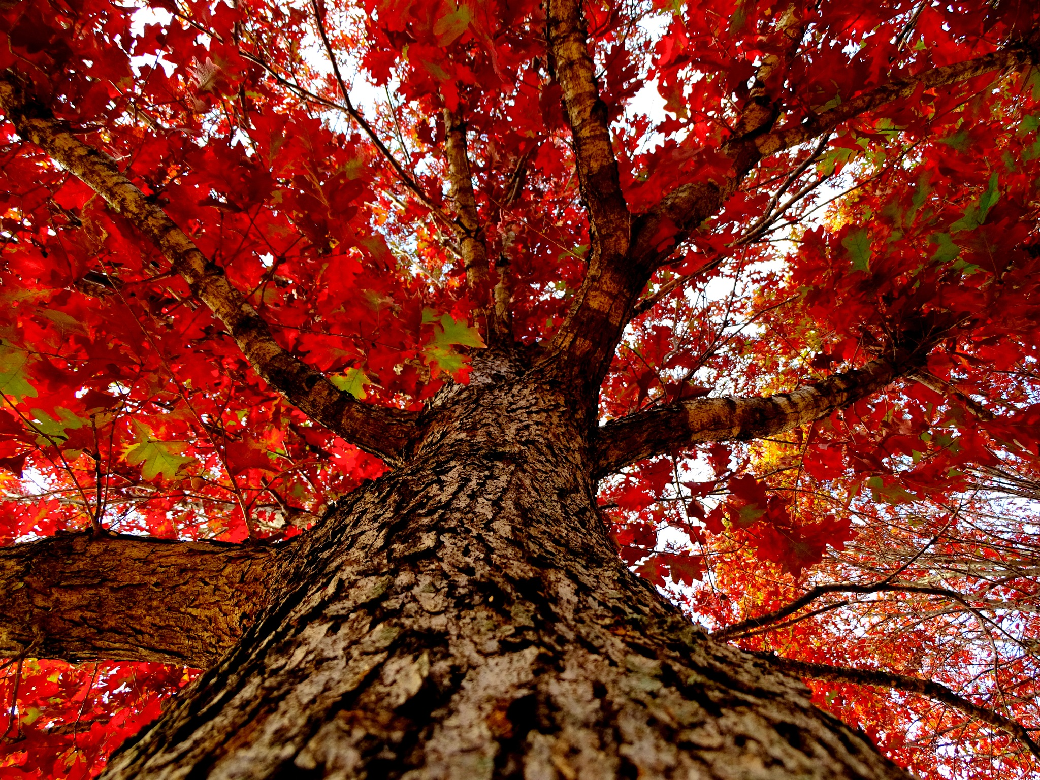 Fall by Patty Stockton