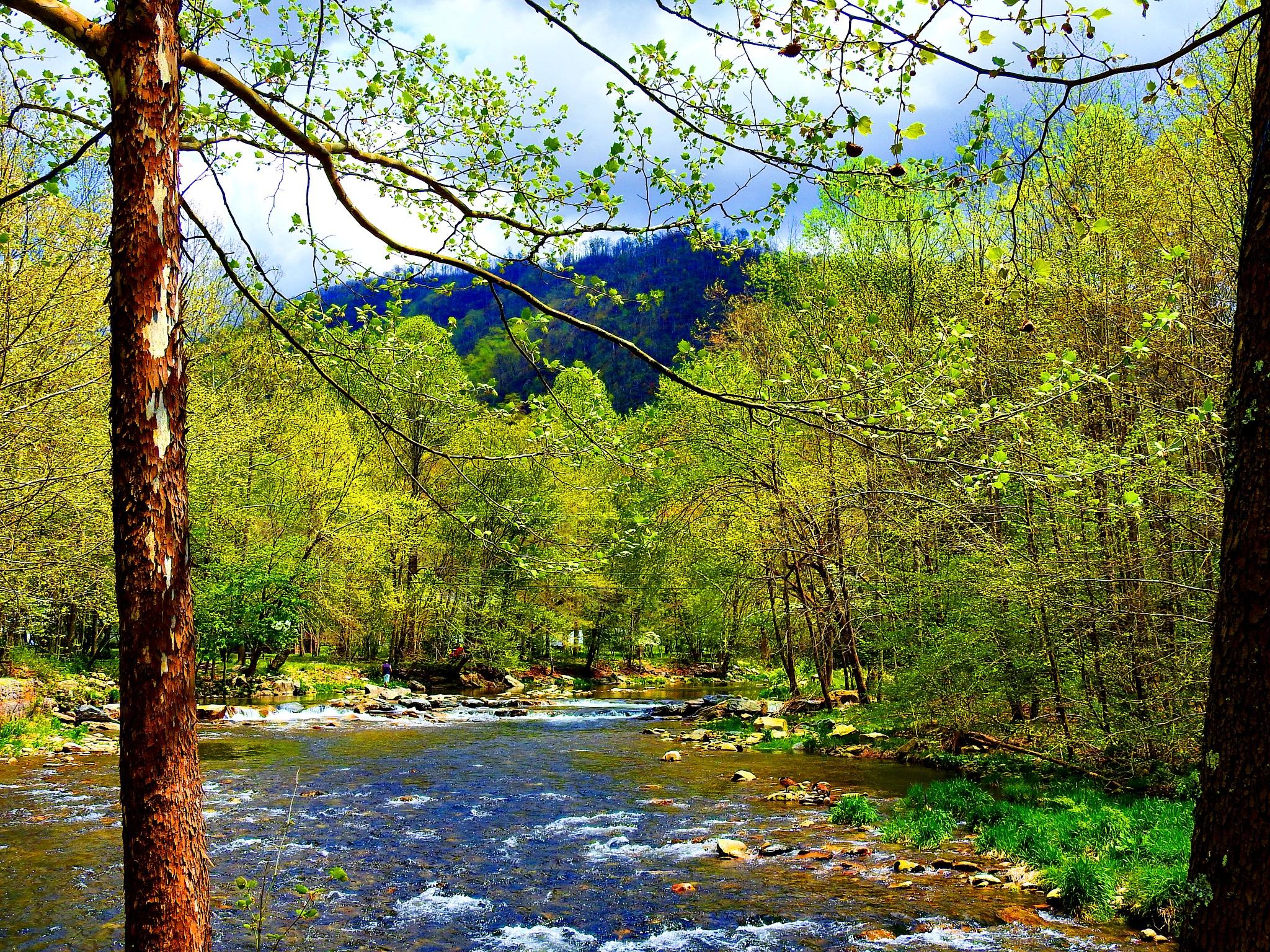 Spring Stream by Patty Stockton