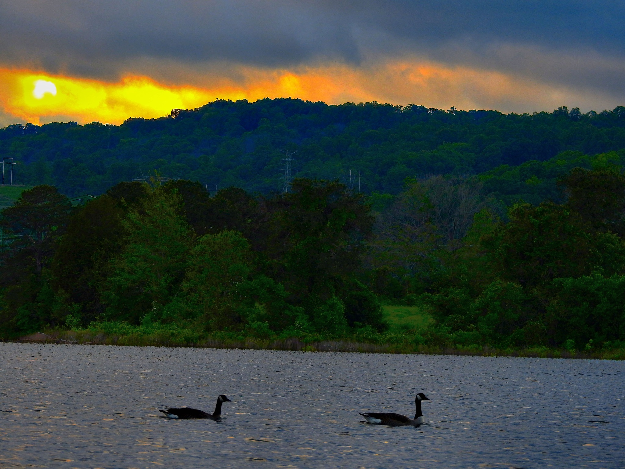 Canadian Geese Sunset on Cherokee Lake by Patty Stockton