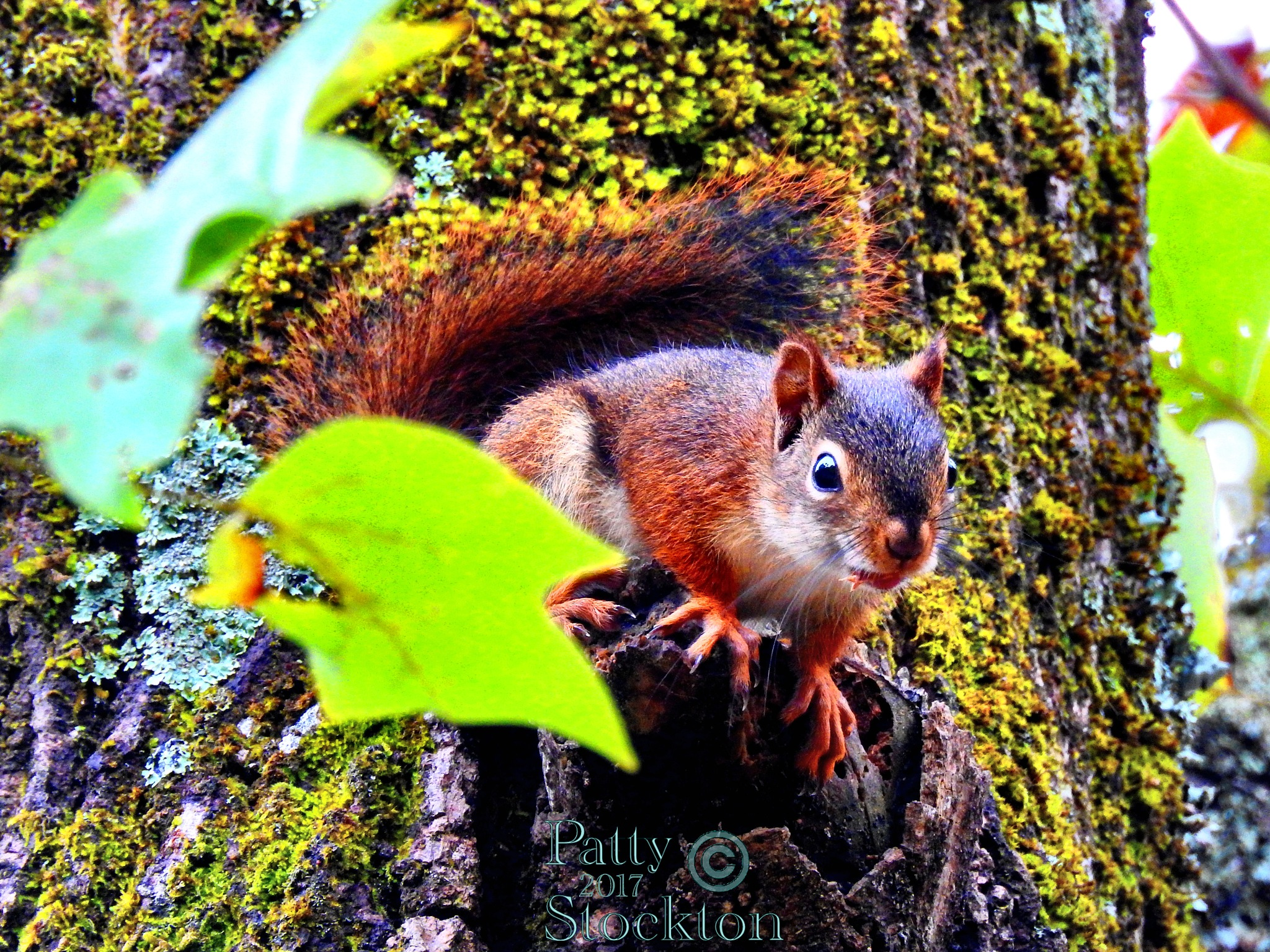 I See You! by Patty Stockton
