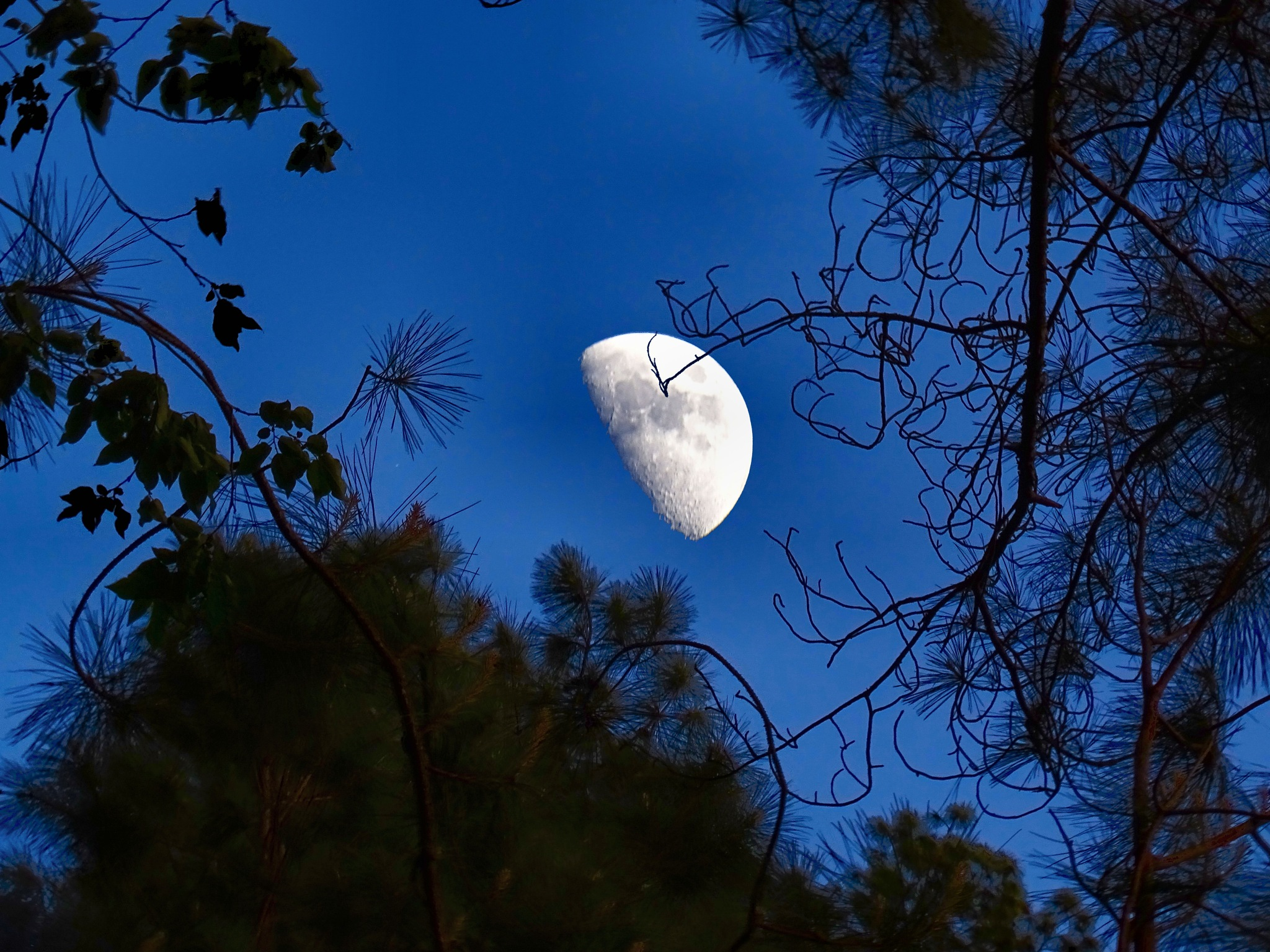 Moon Composite by Patty Stockton