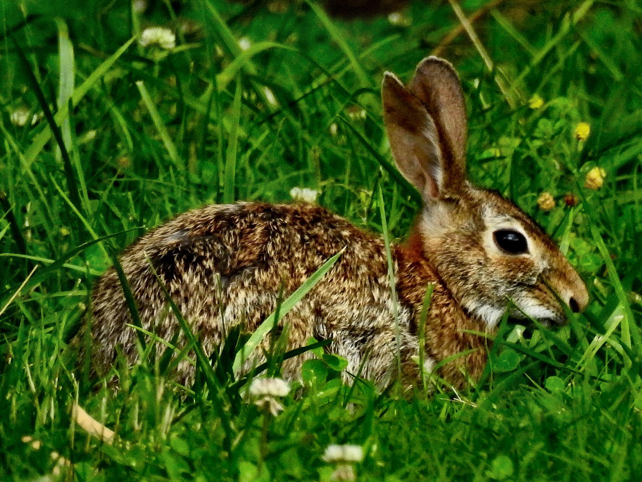 Bunny :) by Patty Stockton