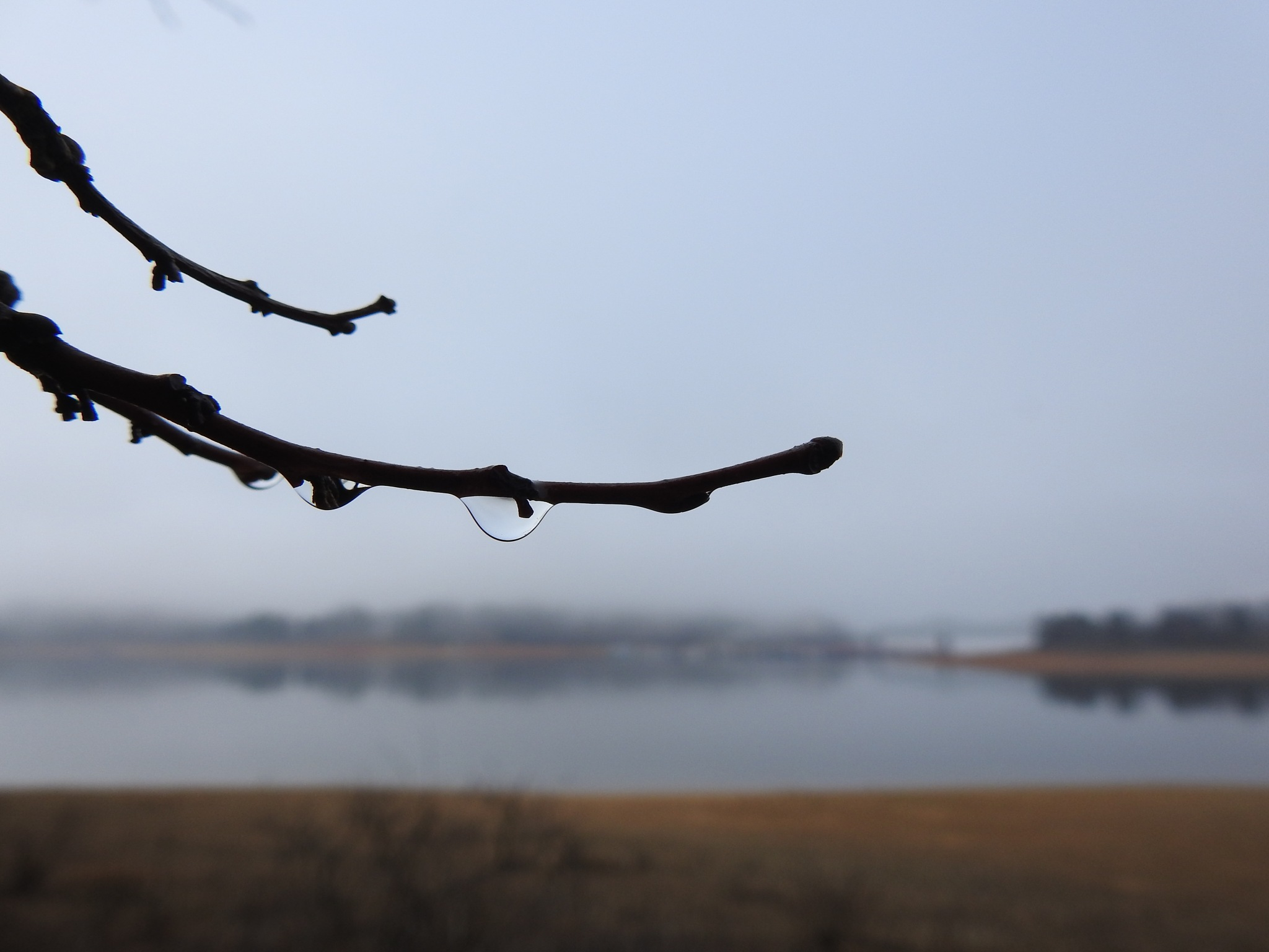 Morning Lake Fog Dew Drop by Patty Stockton