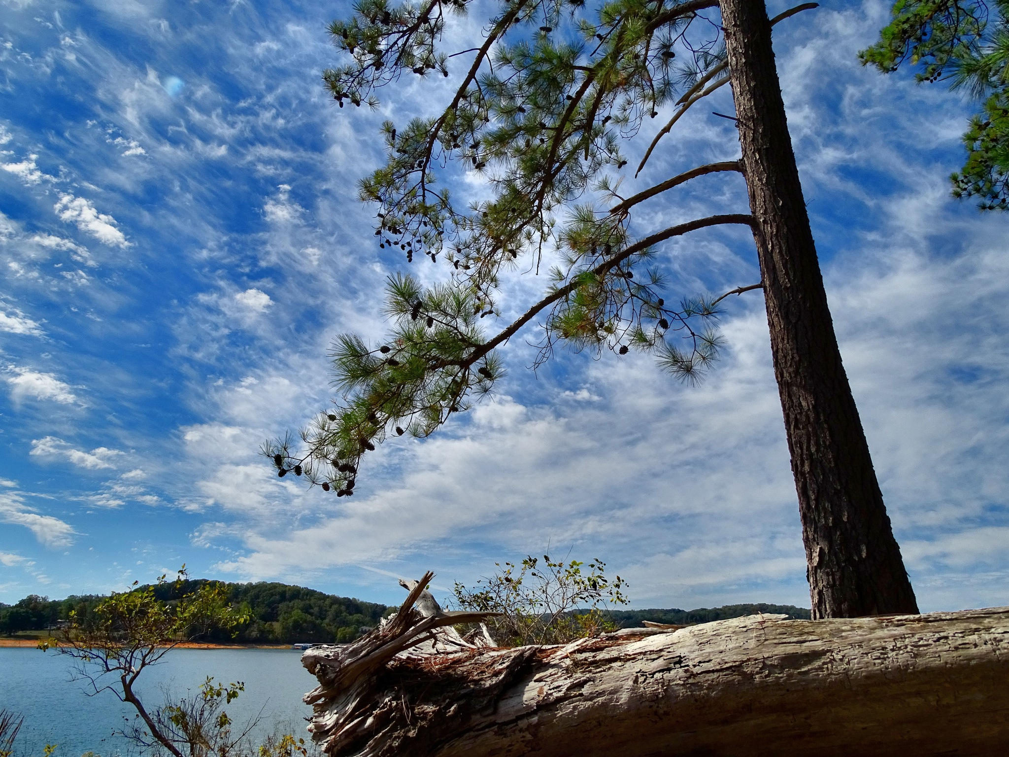 Cherokee Lake Bean Station, Tennessee by Patty Stockton