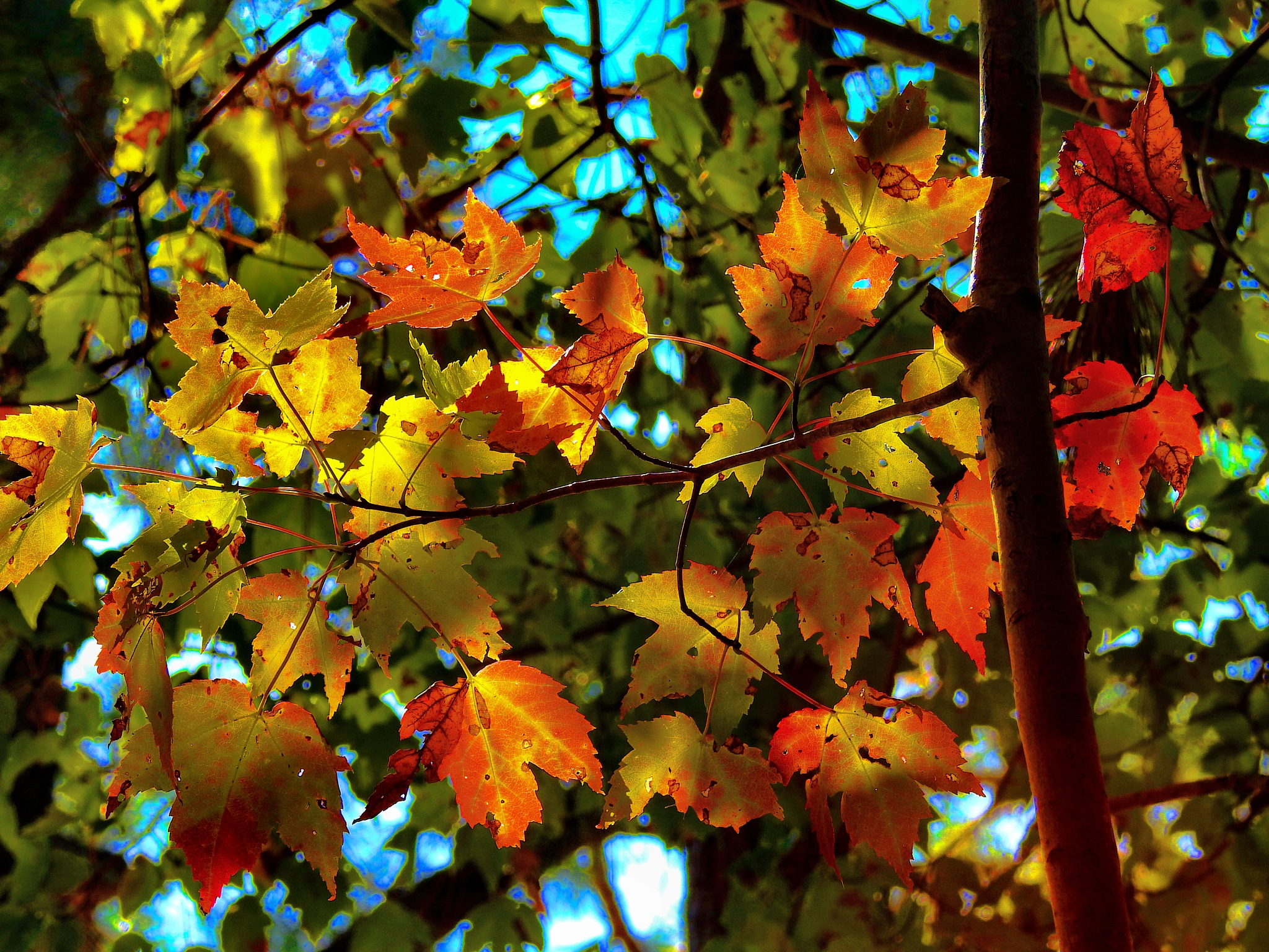 Fall is my FAVORITE! by Patty Stockton