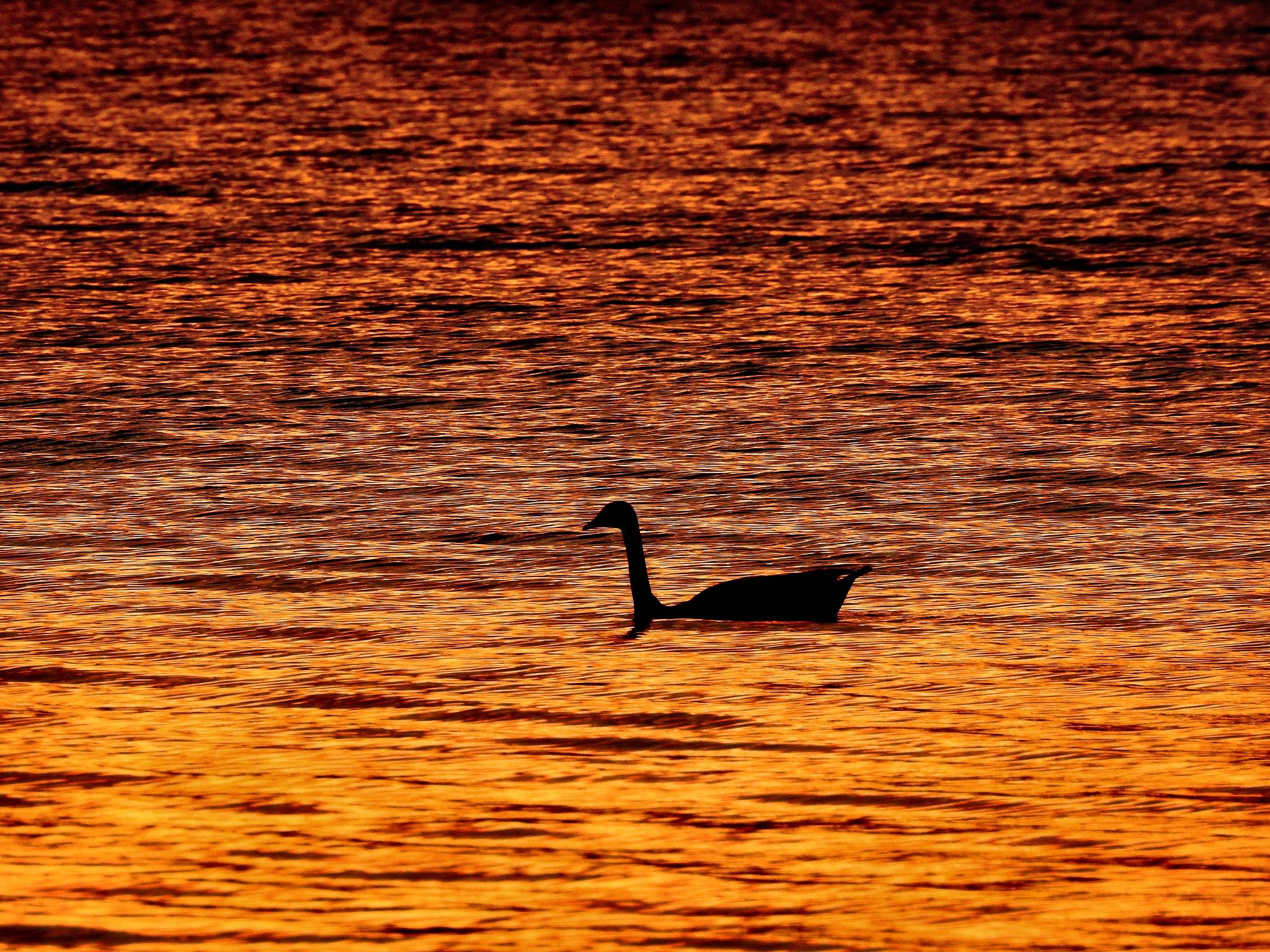 Cherokee Lake Sunset by Patty Stockton