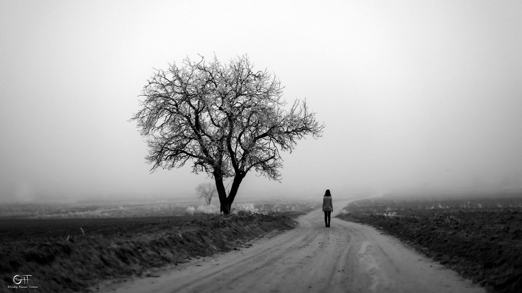 fog 1.2 by Galip Hasan Temur