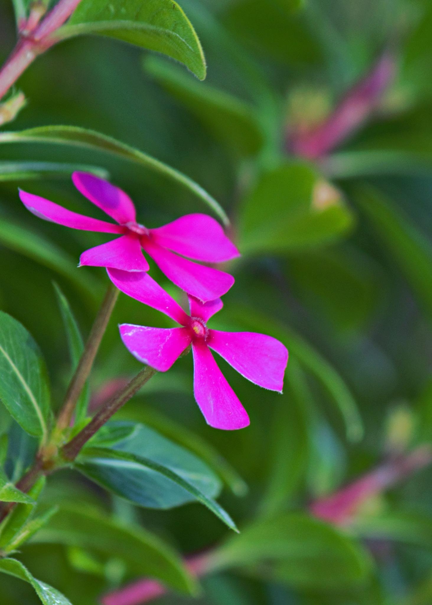 In Bloom by Zohel Mercado