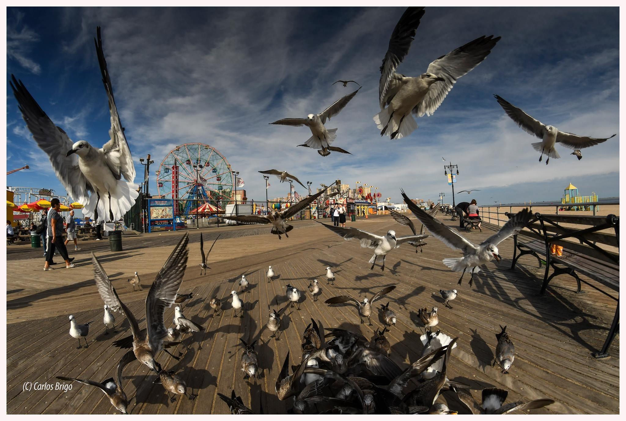Gaviotas de Coney Island by Carlos Brigo