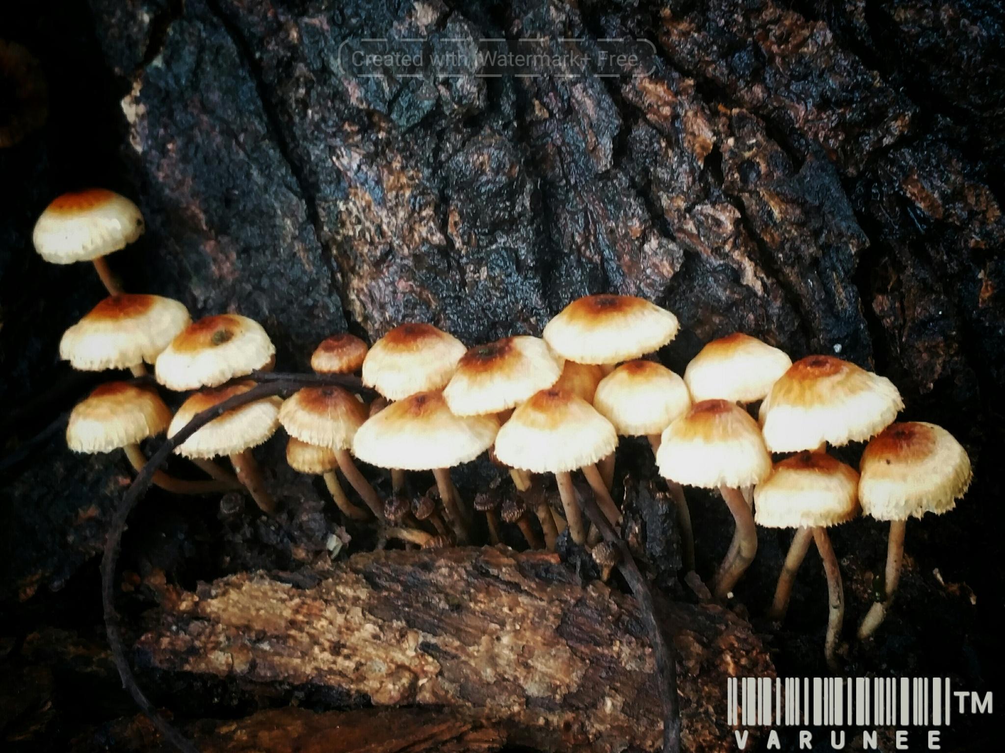 i love my mushroom under the tree. by baimhonkaa