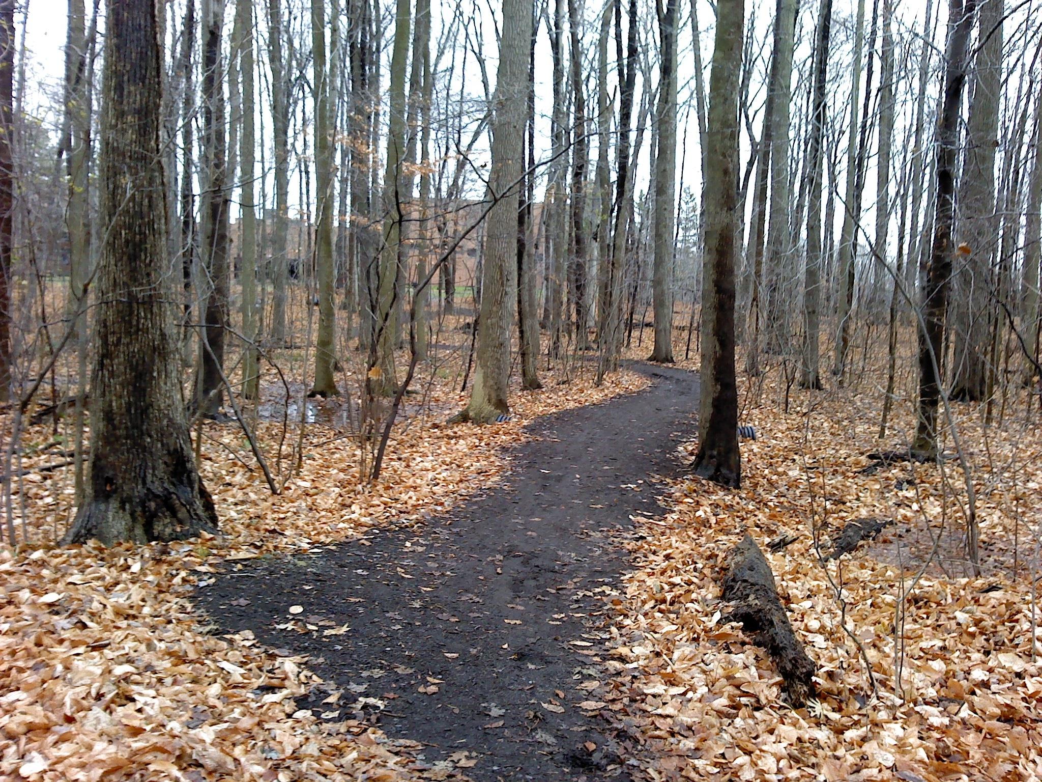 Fall season trail by Aaron Pfeiffer