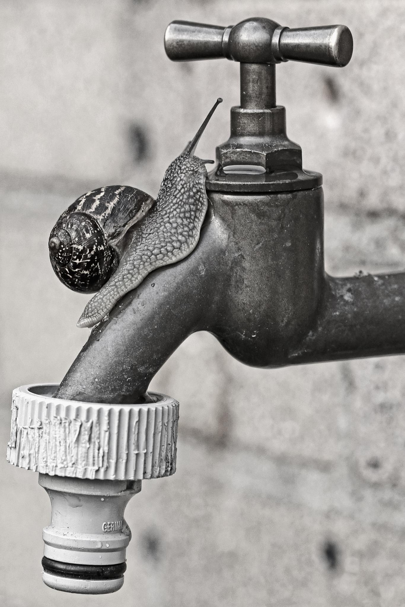 A tap-snail ;-) by MarcoWeening