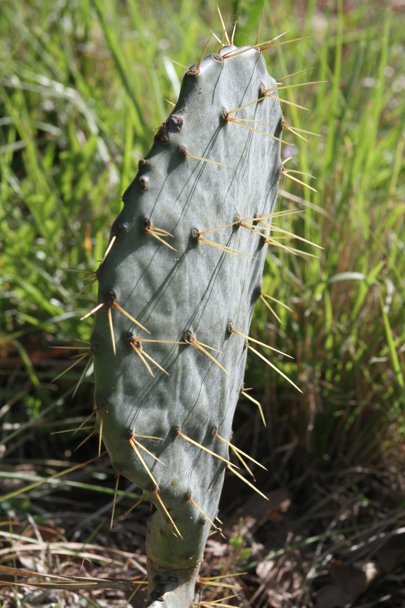 A prickly situation by EPDatabert