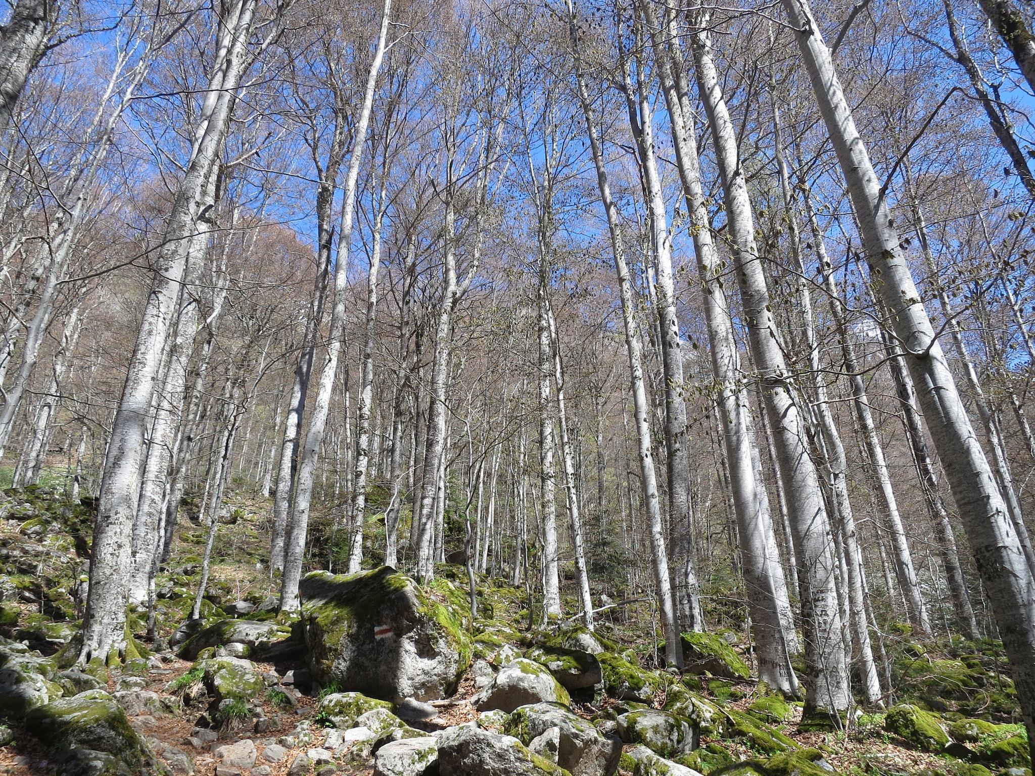 Bulgarian Nature 2 by GraemeLeePollard