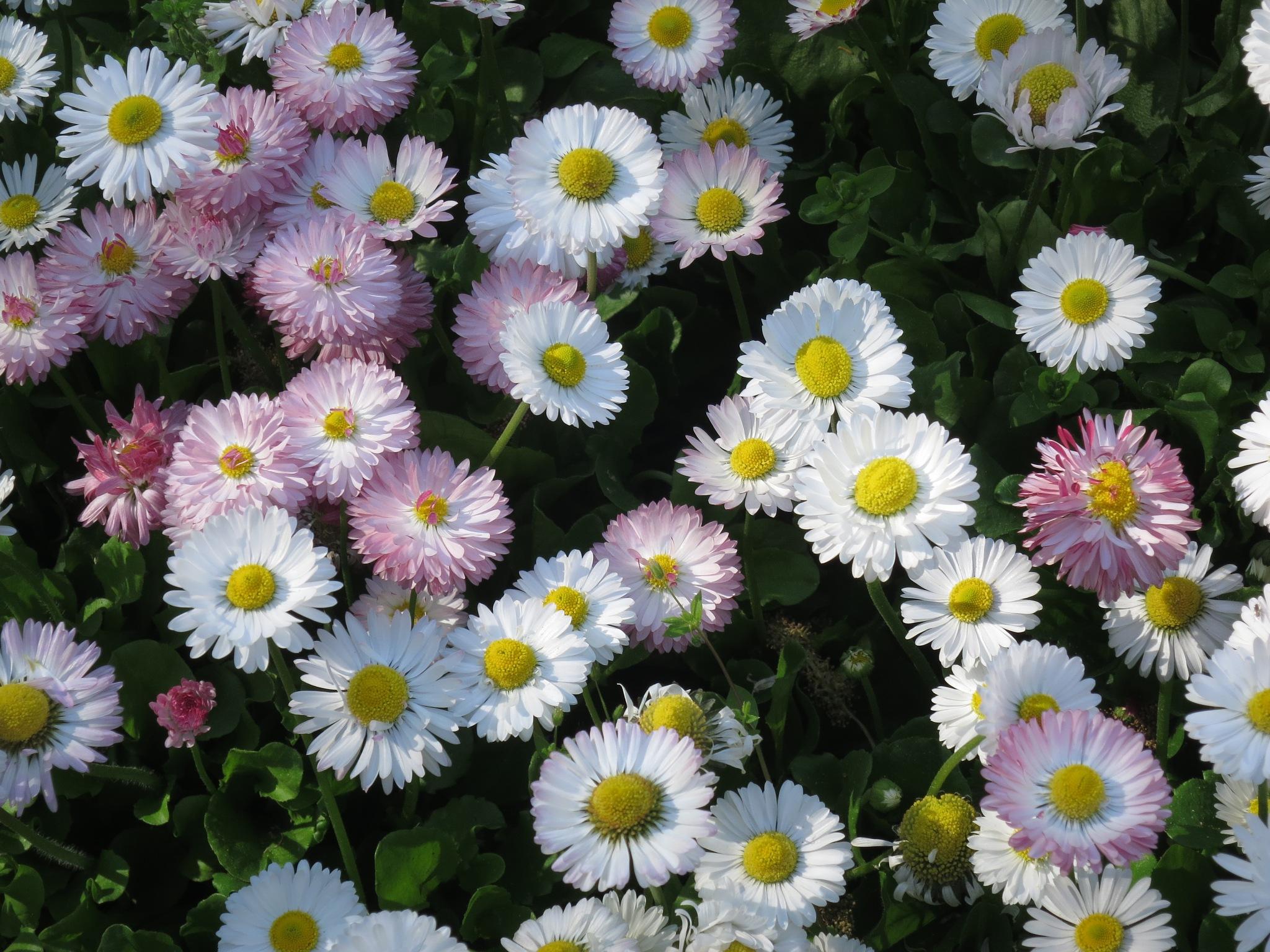 Flowers in Plovdiv 2 by GraemeLeePollard