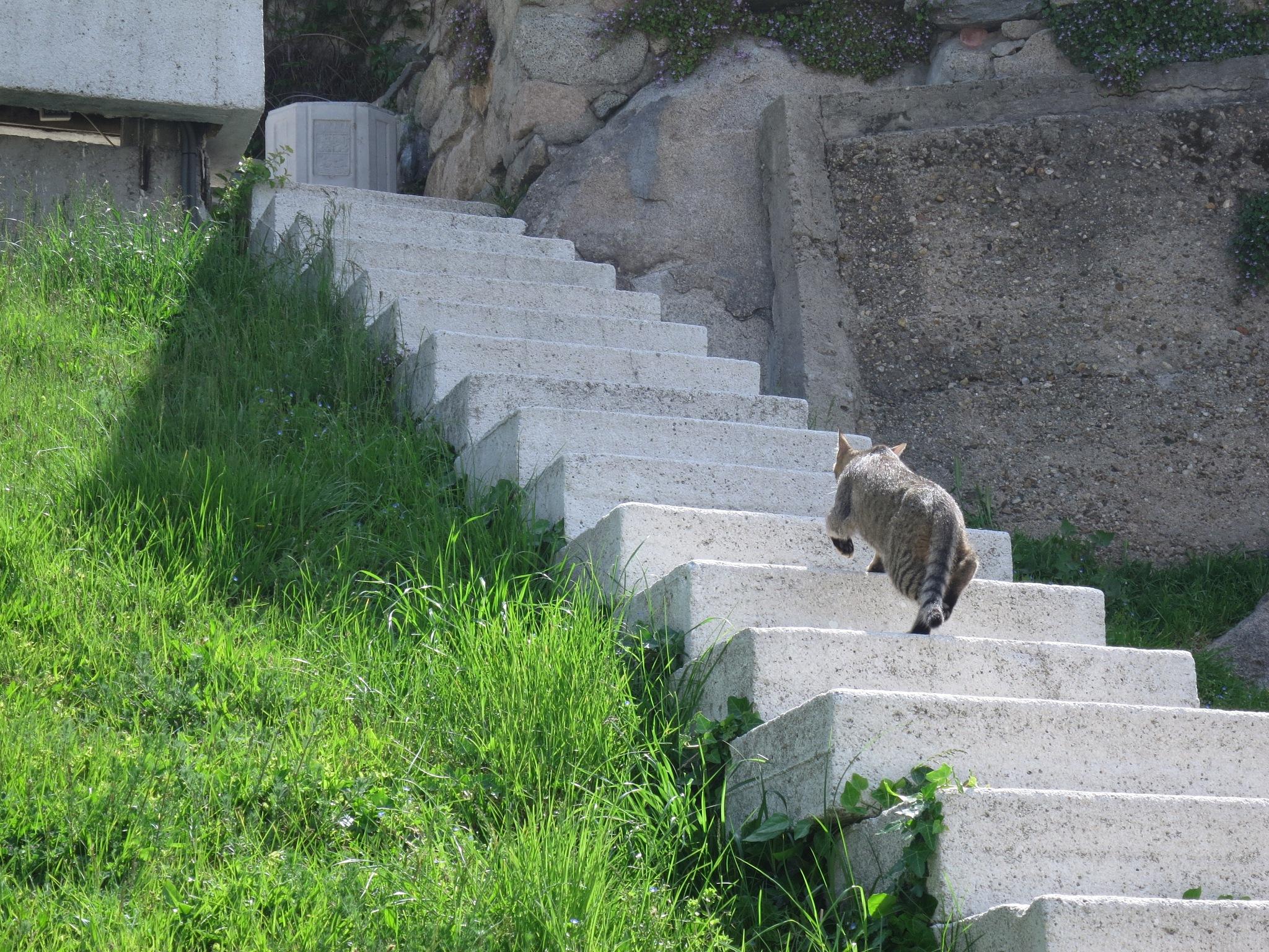 Cat Climbing Steps by GraemeLeePollard
