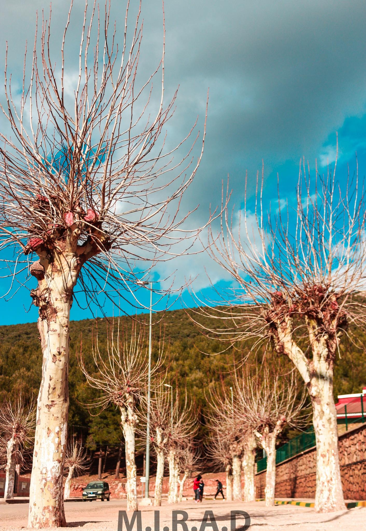 nature by Nourdin Mirad