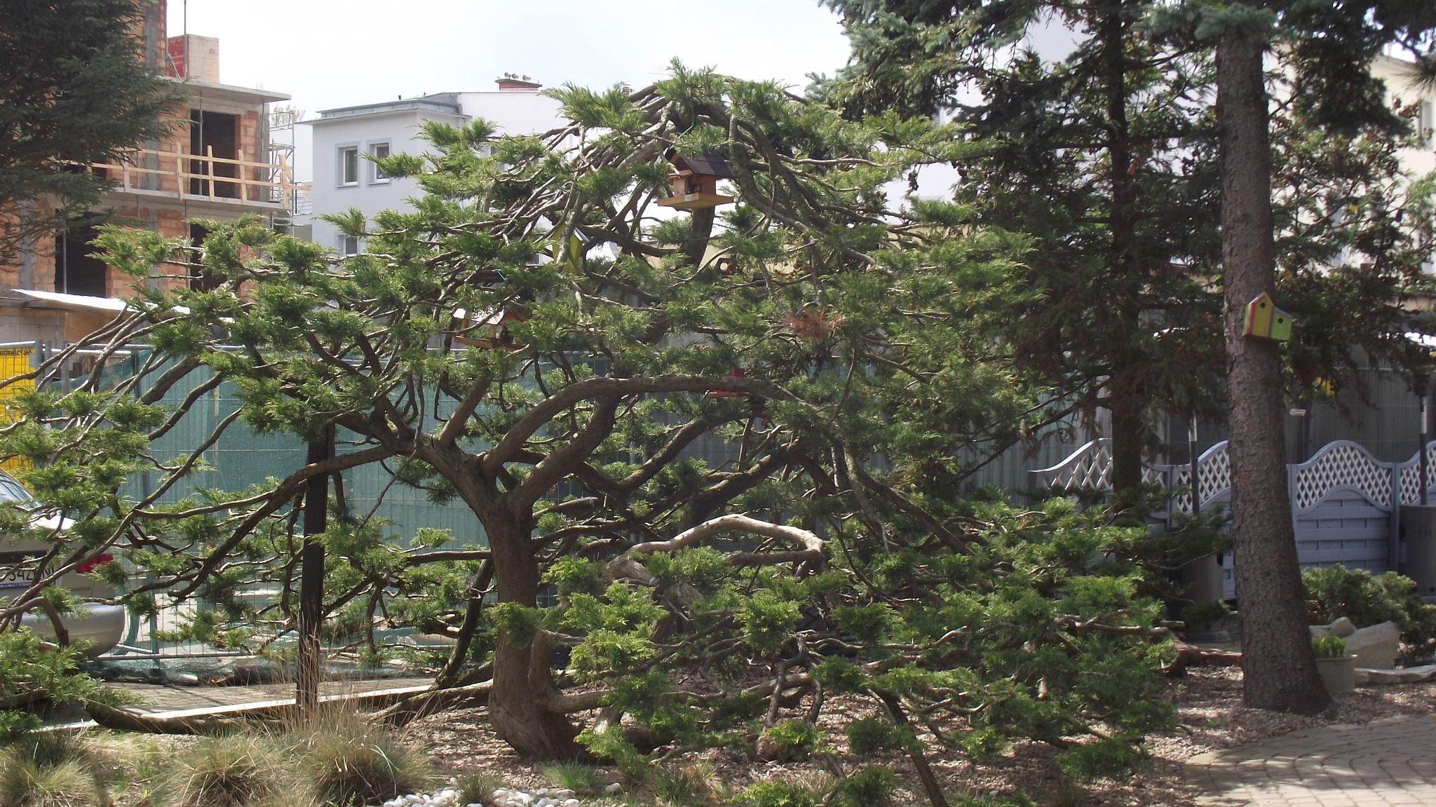 drzewko by Zbyszek Kolano