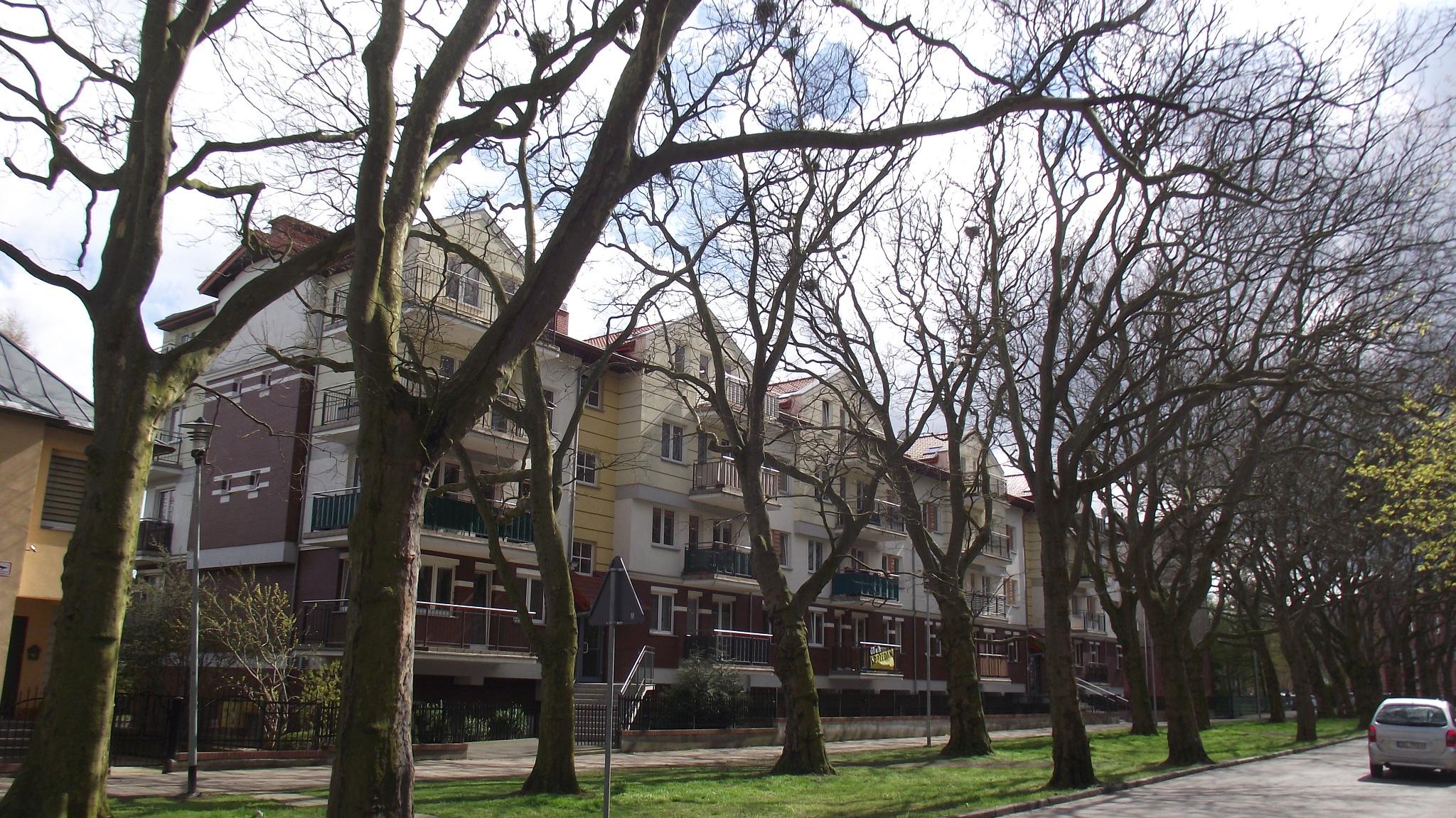 aleja drzew by Zbyszek Kolano