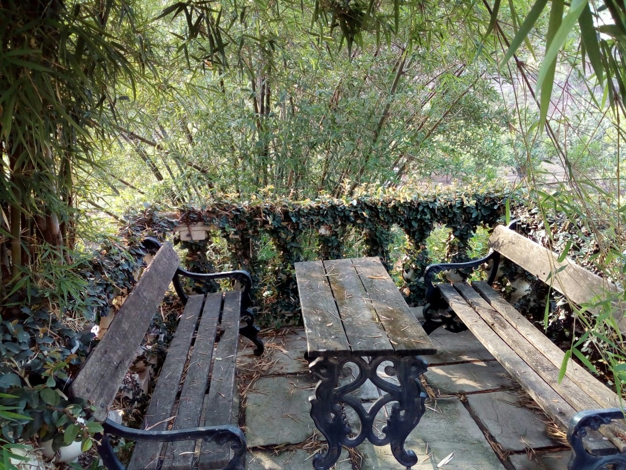 Two benches & a table in a groove of bamboo trees, lonely 7 waiting. by TariqKhan