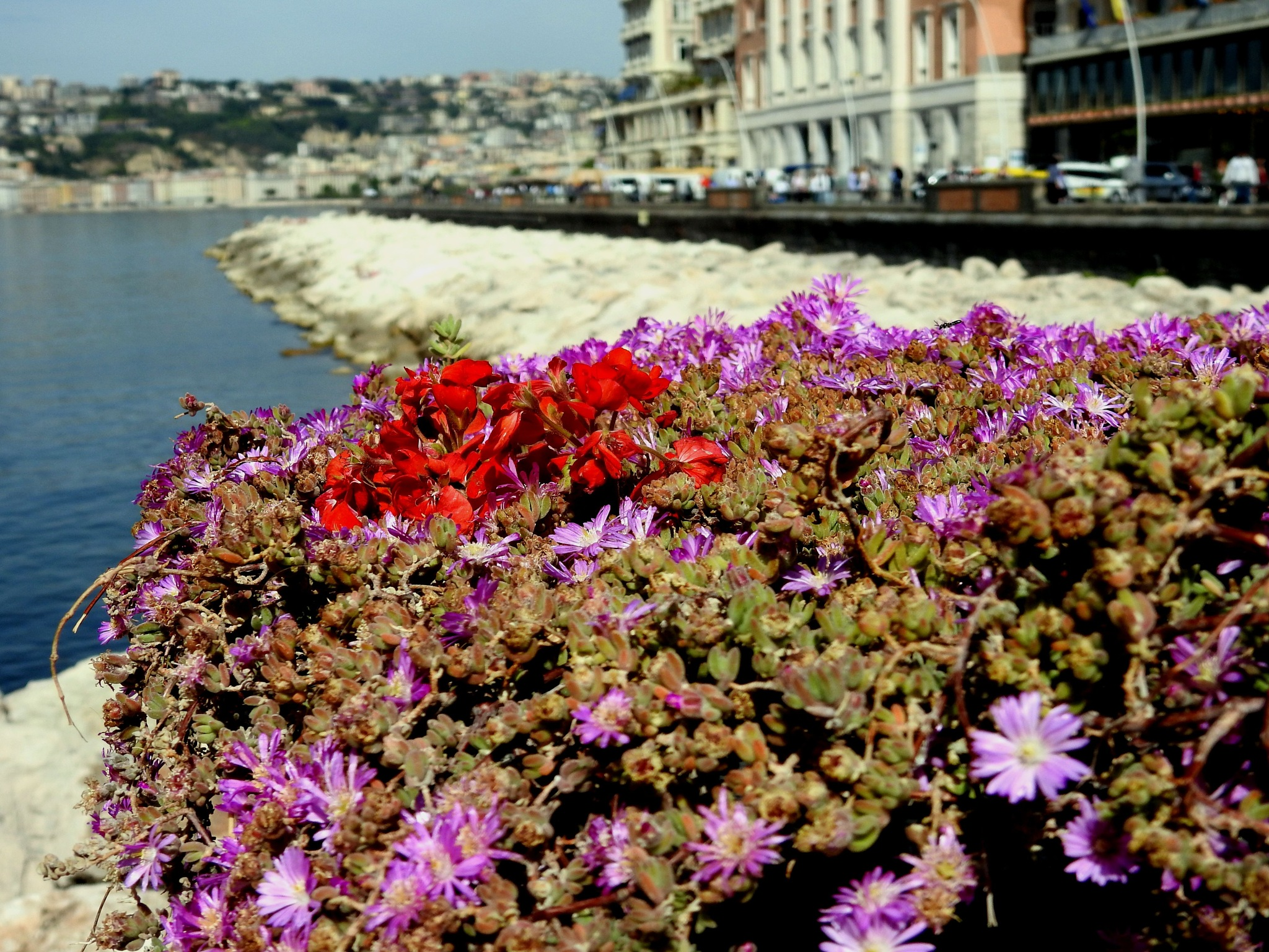 Naples - Flowers With Landscape by Arnaldo De Lisio