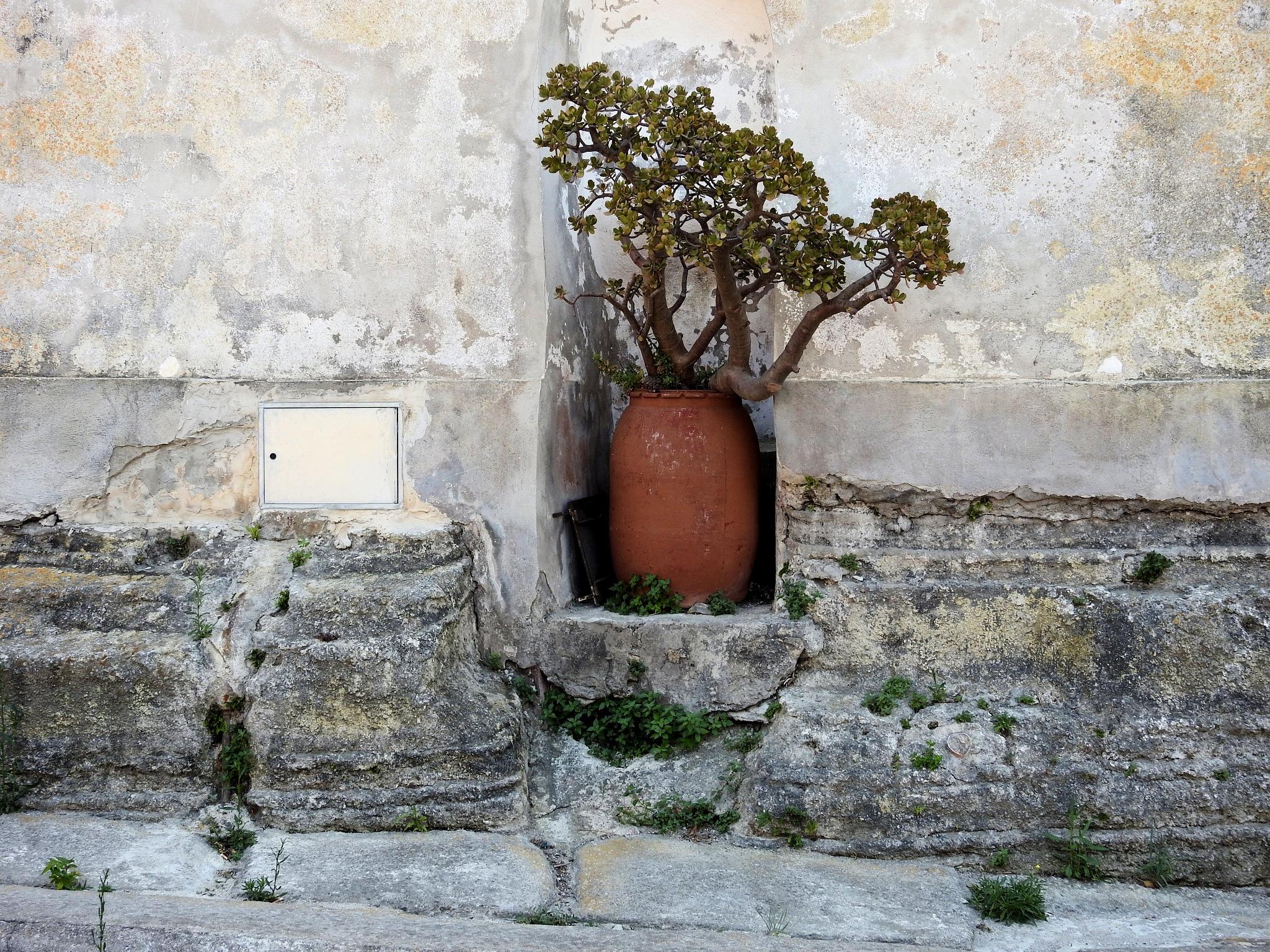 Procida - The Pot Of The Jail of Terra Murata - 2 by Arnaldo De Lisio