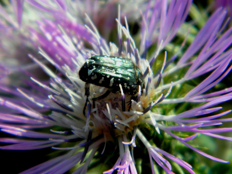 Flower & Bug by Arnaldo De Lisio