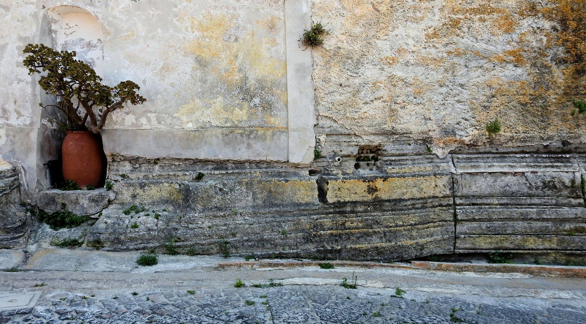 Photo in Street Photography #napoli #italia #naples #arnaldo de lisio #island #procida #terra murata #pot #vaso #plant #pianta #isola