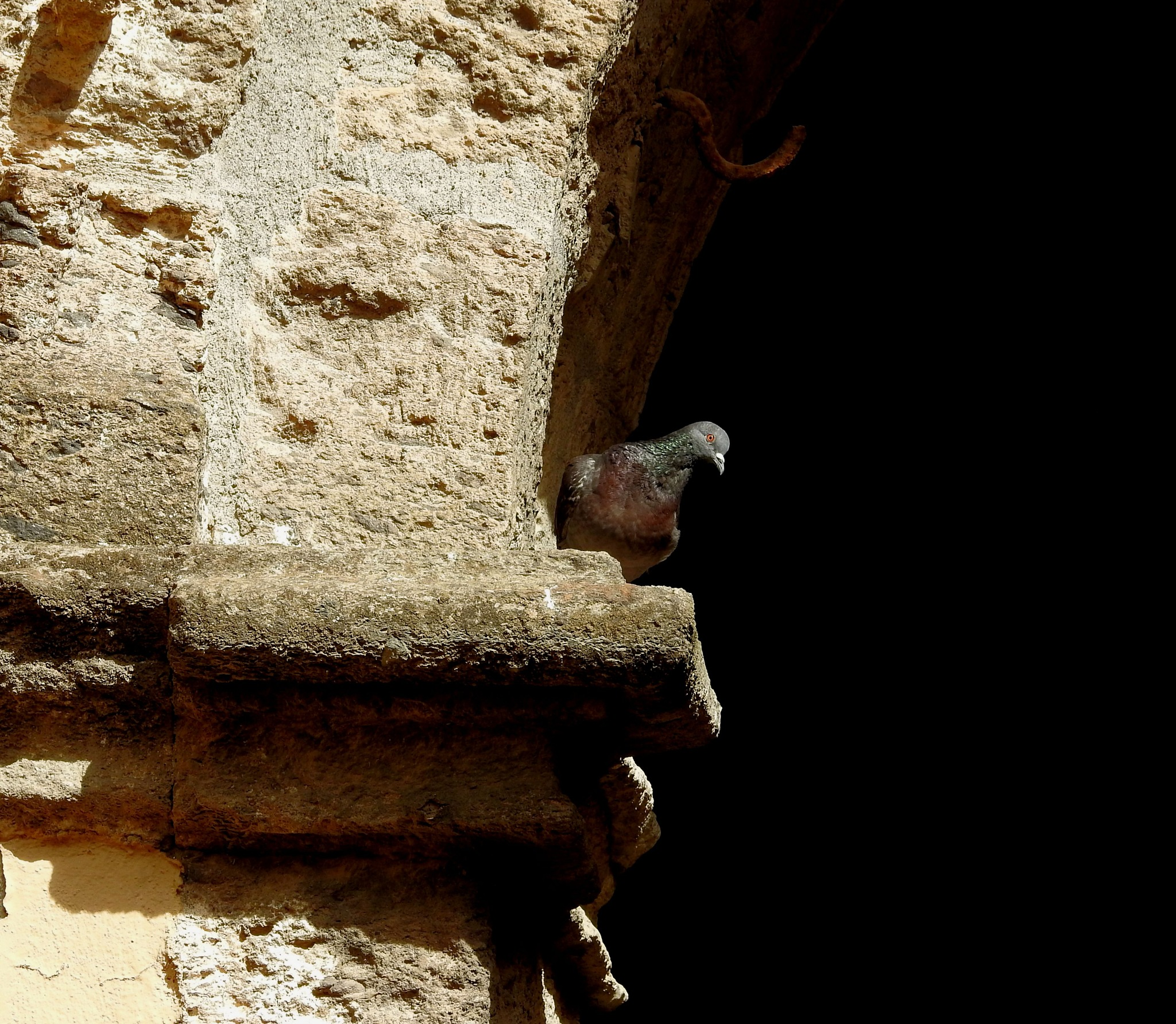 The Pigeon and The Castle.. Castel dell'Ovo... Naples by Arnaldo De Lisio