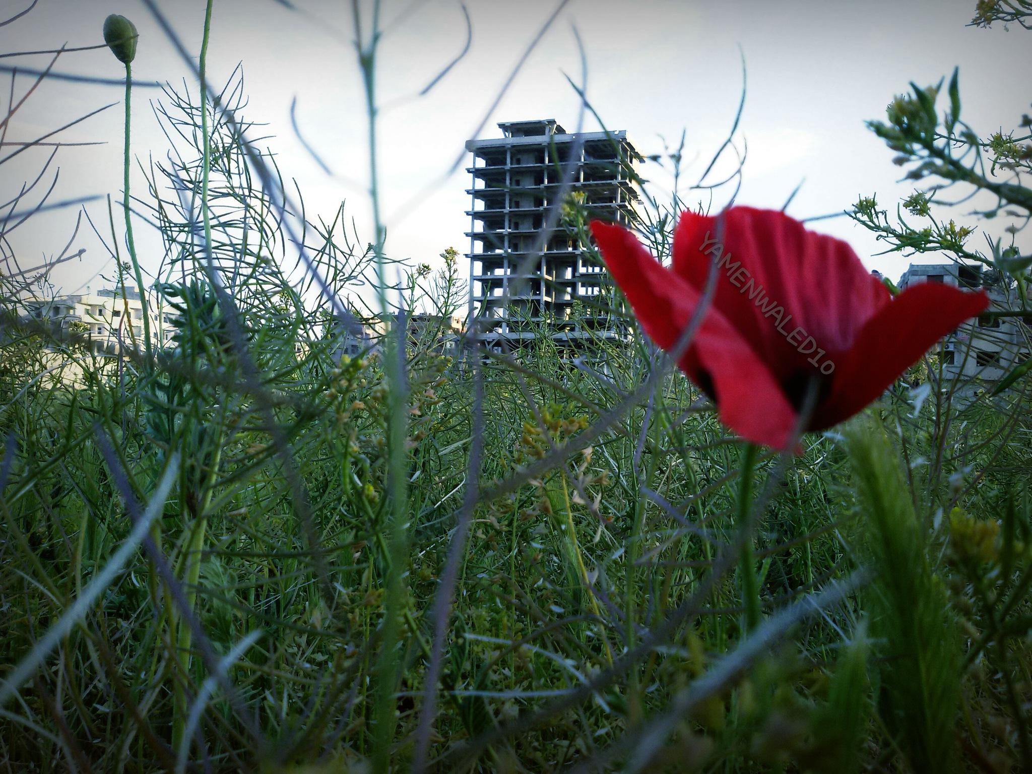 Douma  by YAMENWALED10