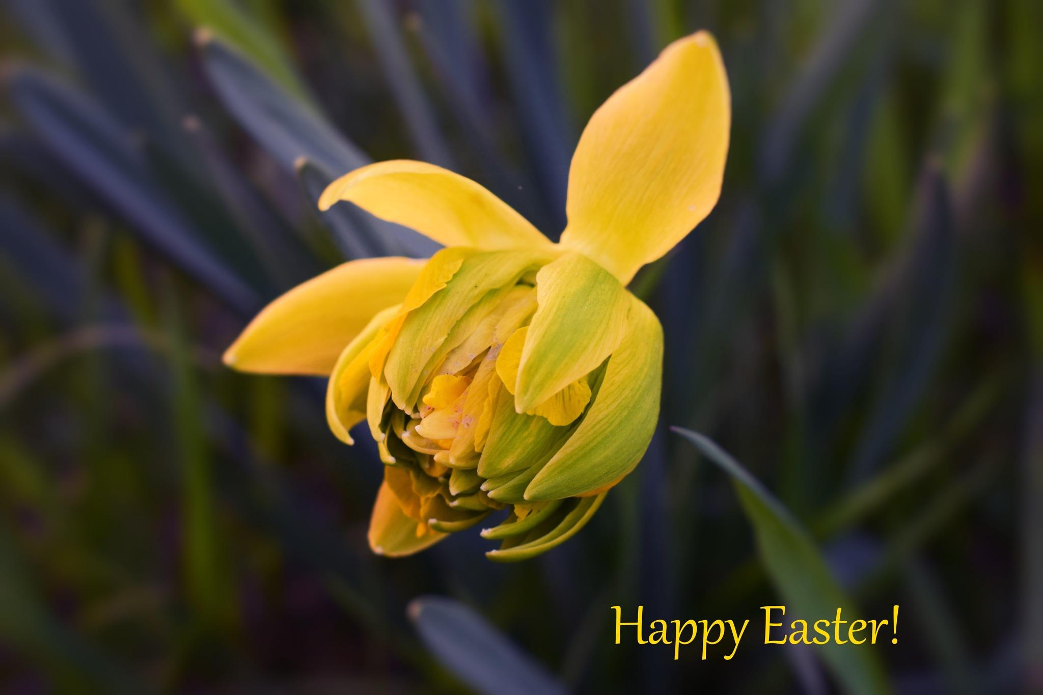Happy Easter by Javorka