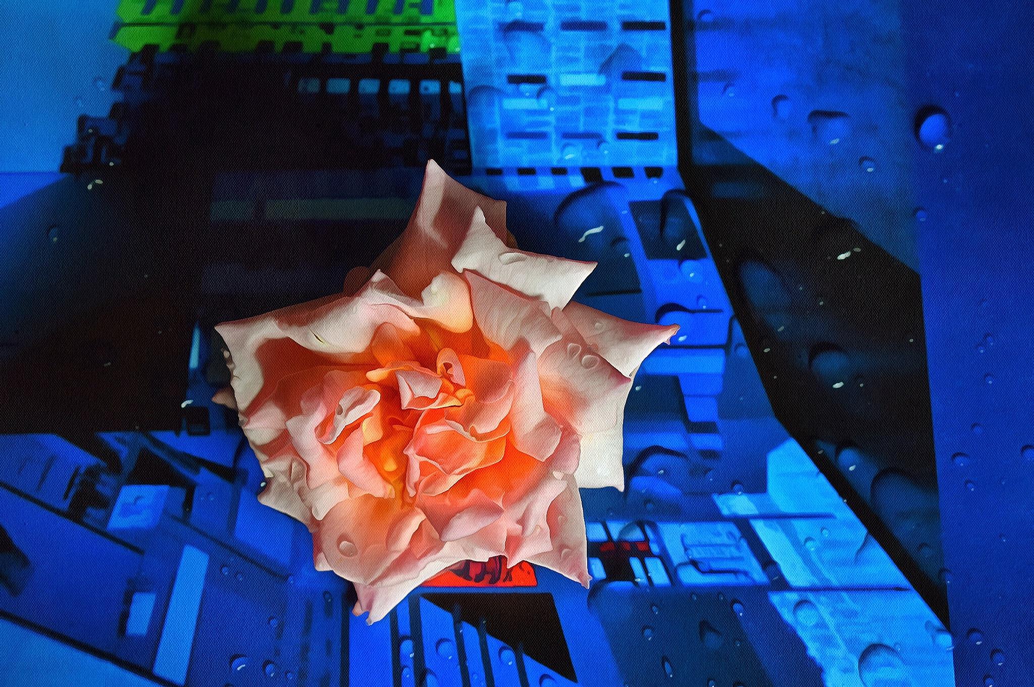 Rose by Javorka