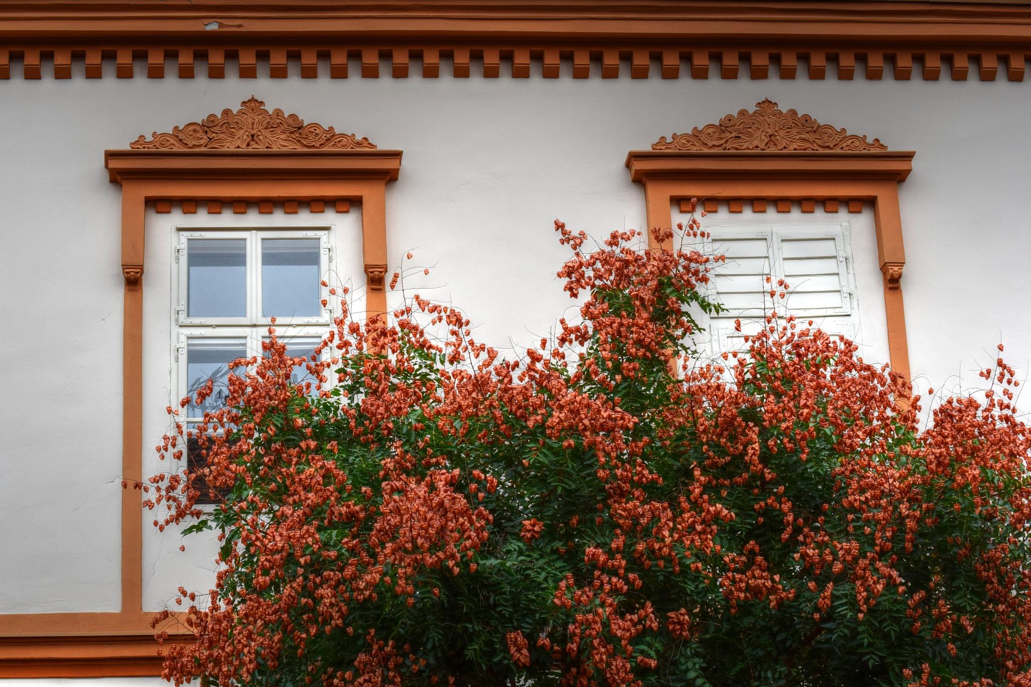 Windows by Javorka