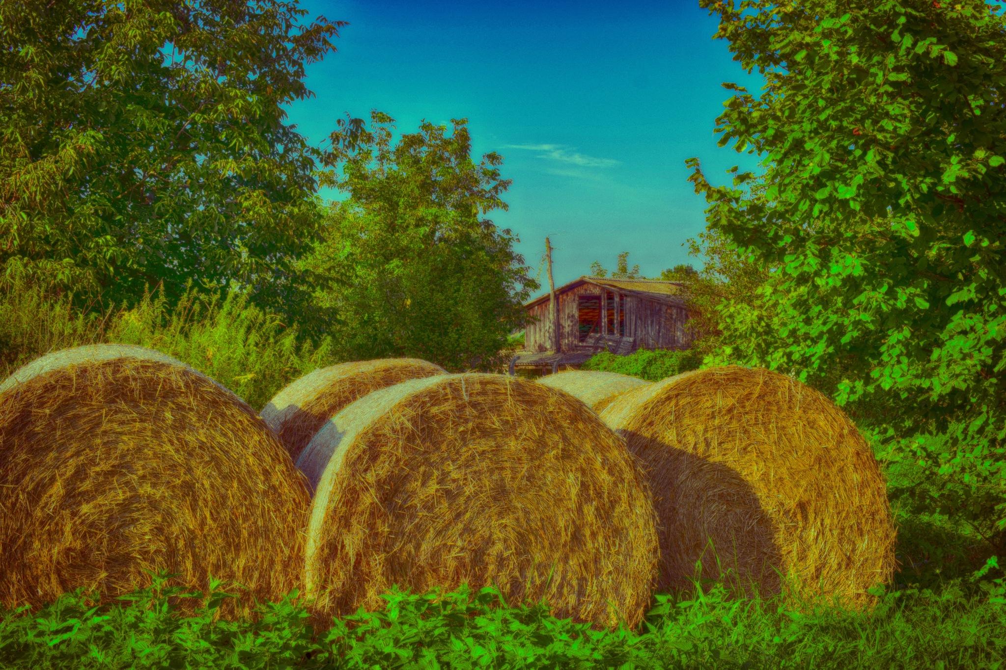 Harvest by Javorka