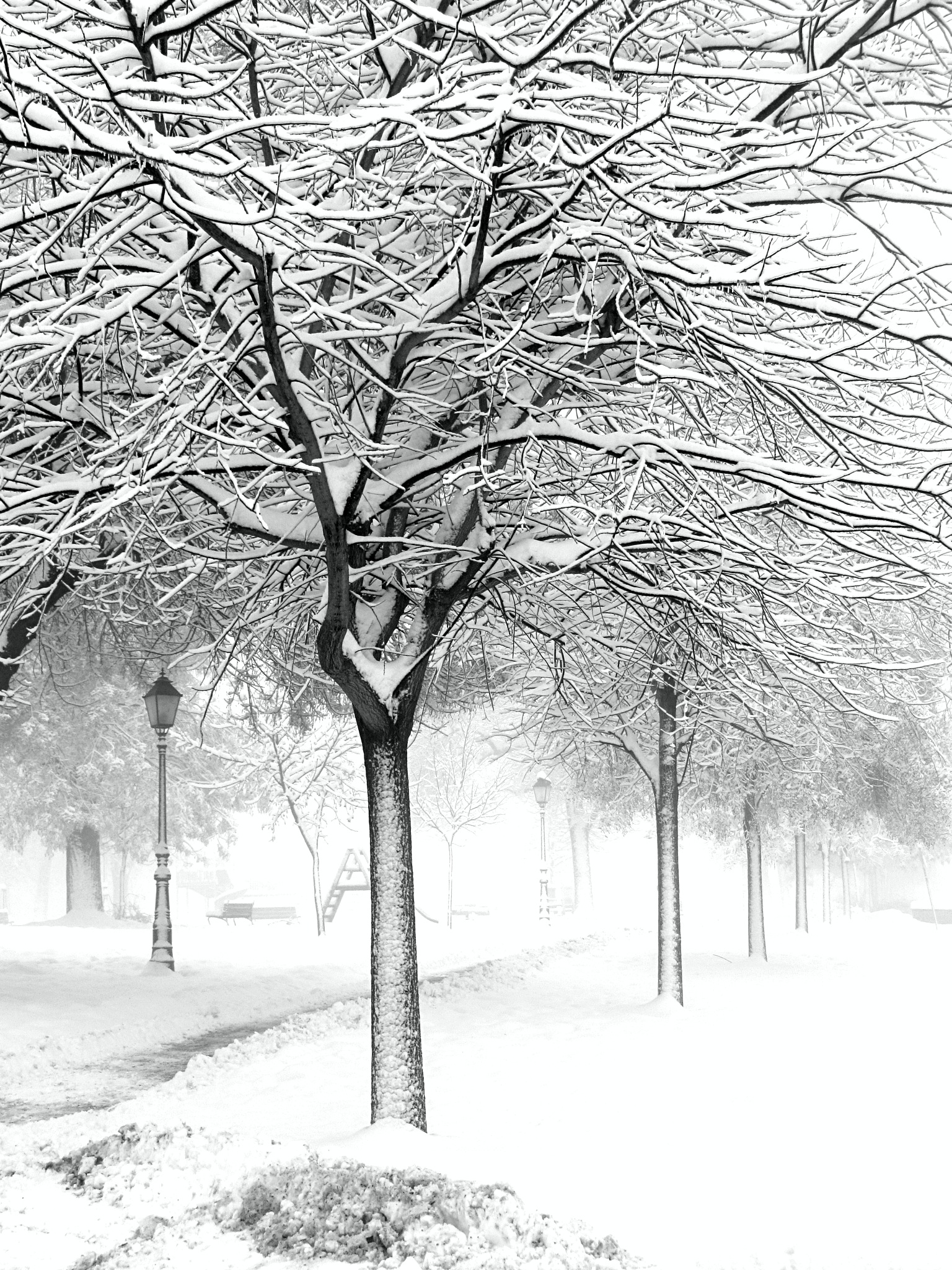 Lost in white by Javorka