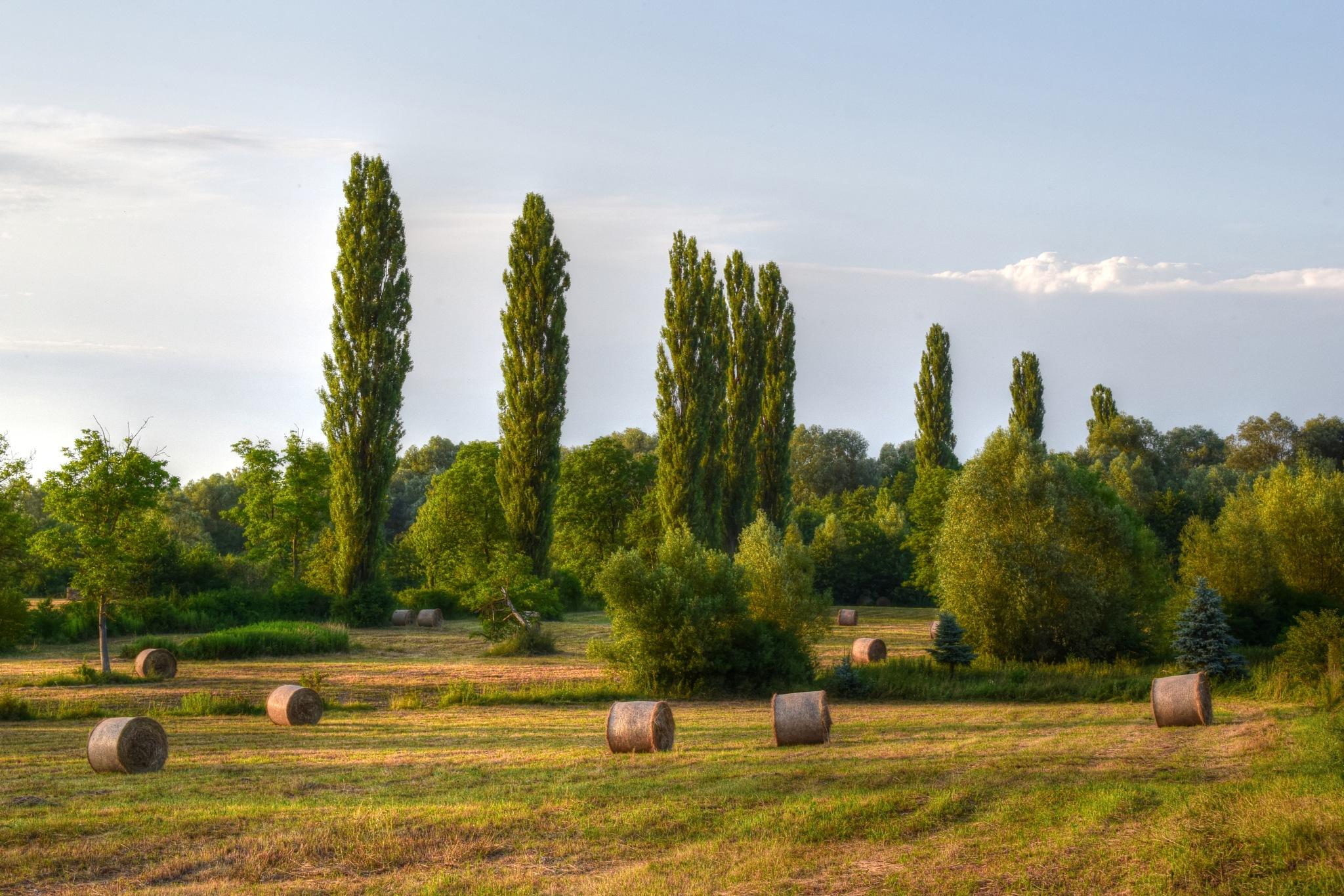 Hay by Javorka