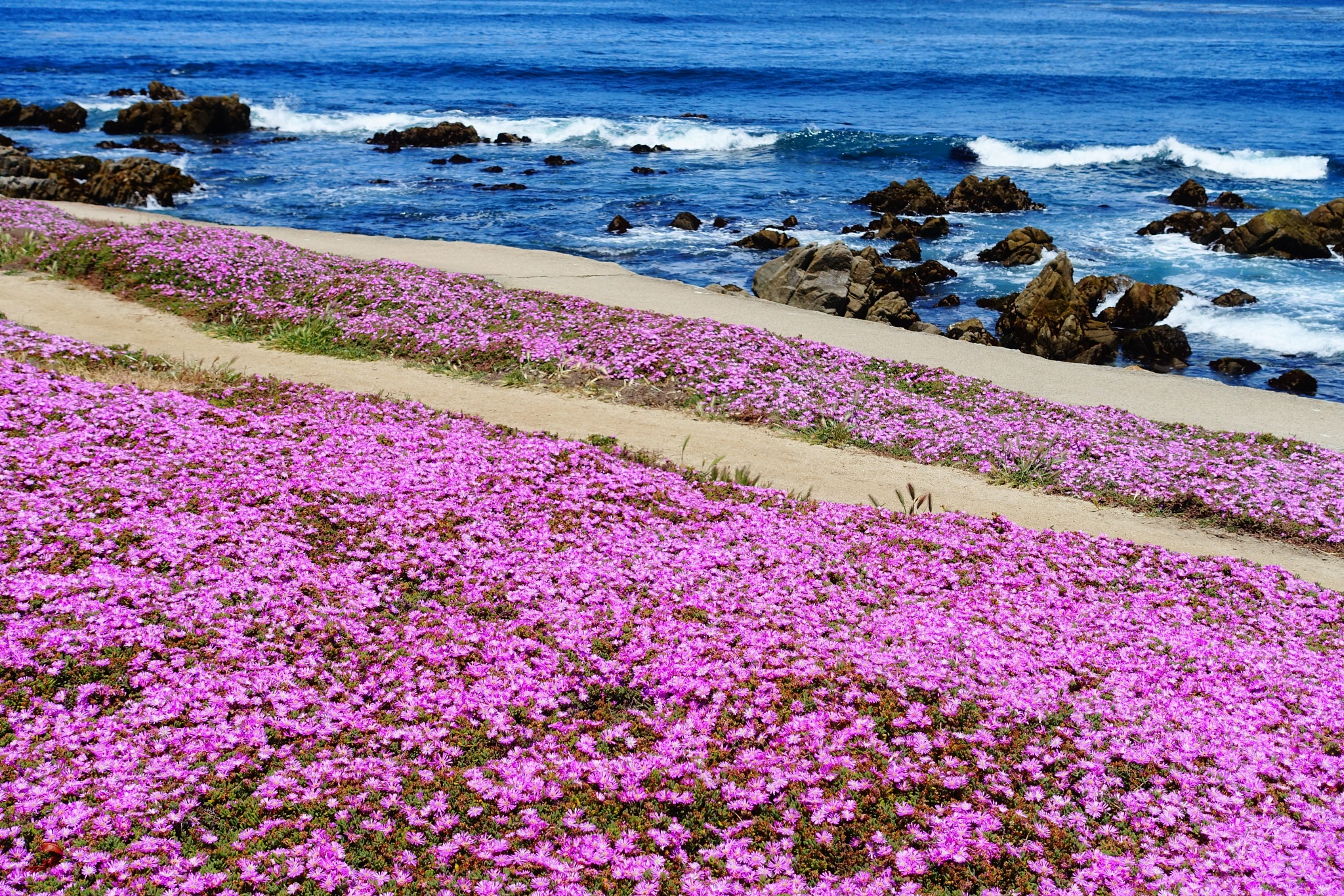 Ice Plants by Chandler