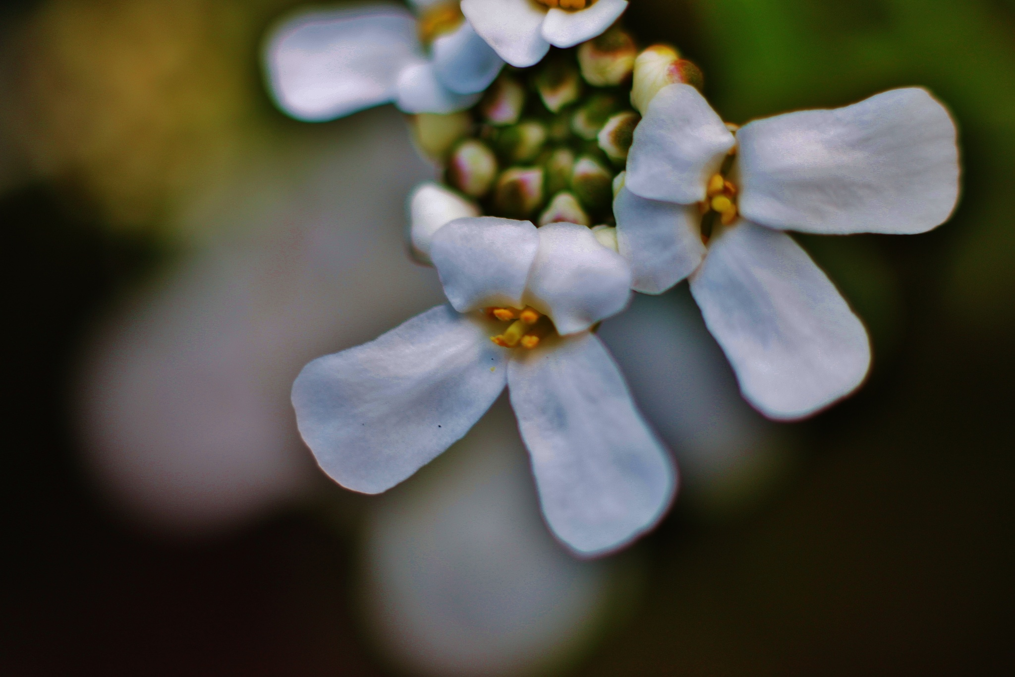 Petites fleurs blanche2,, by Liborio Drogo