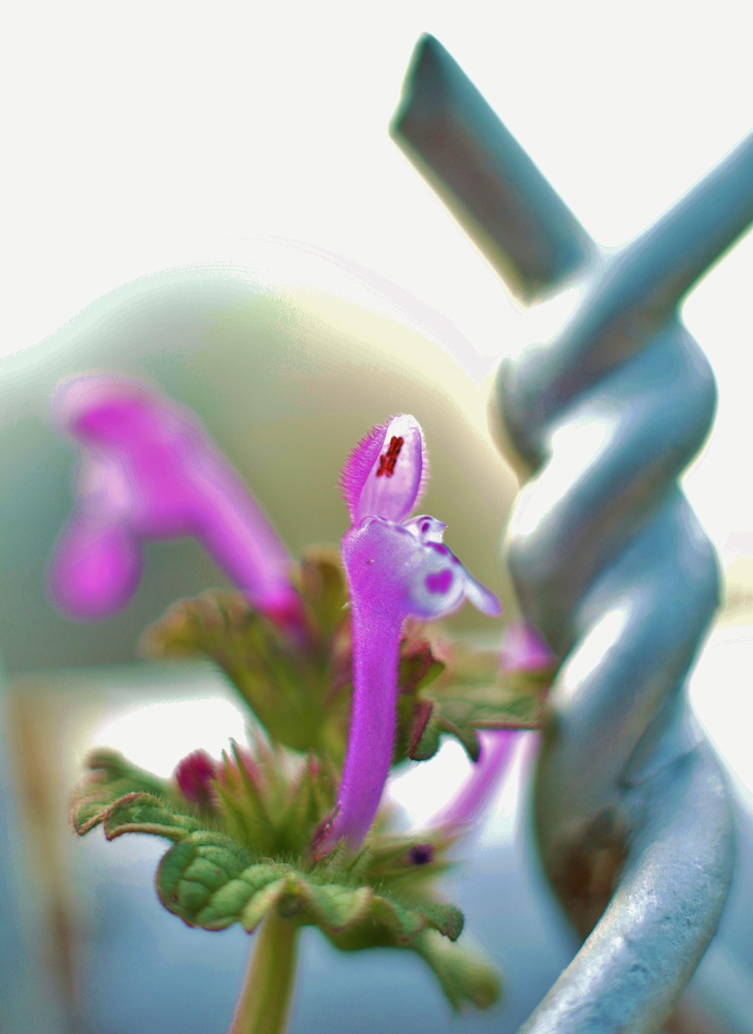 Flower 3,,, by Liborio Drogo