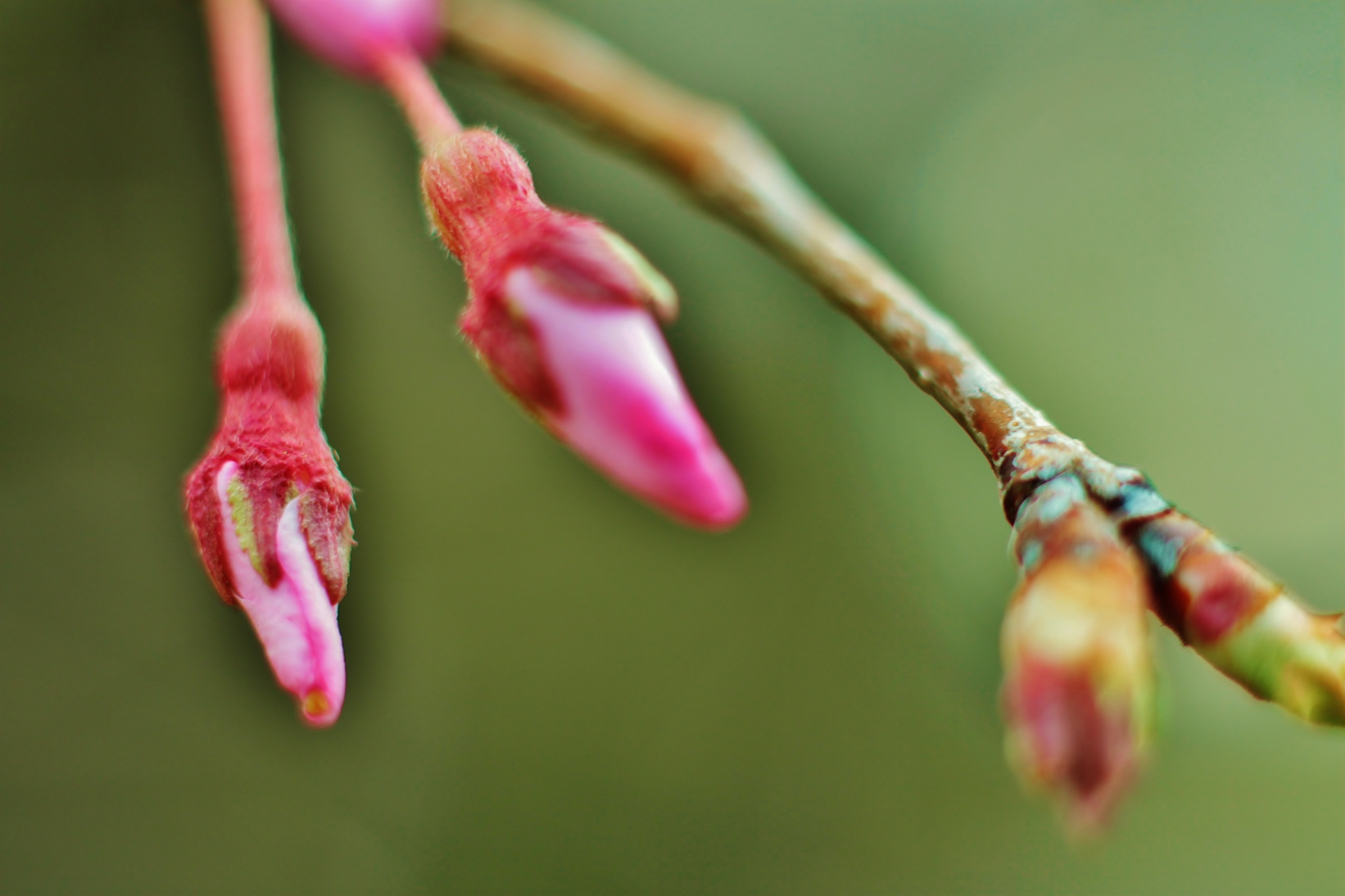 SPRING Time is here, by Liborio Drogo