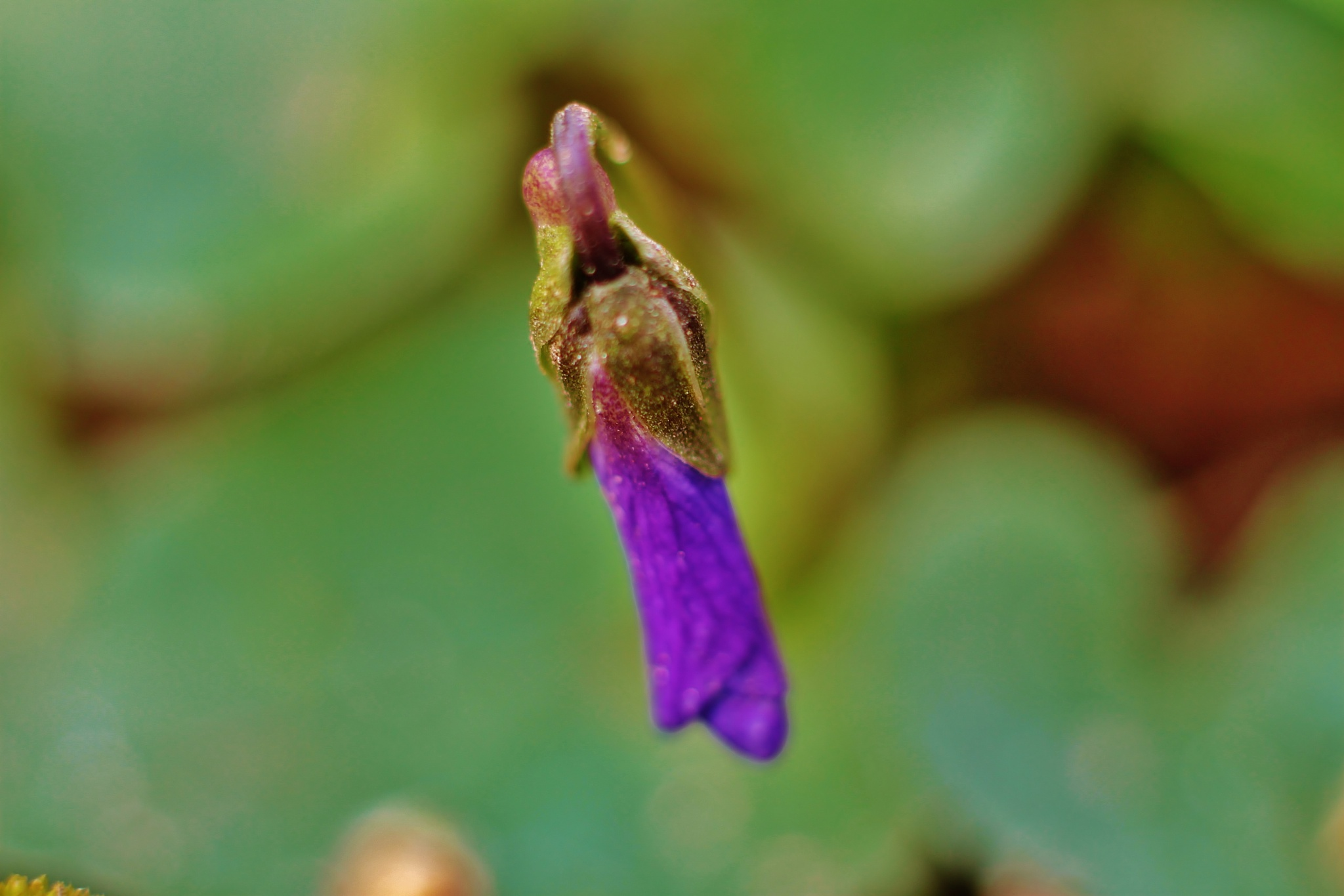 Petite fleur de printemp,,, by Liborio Drogo