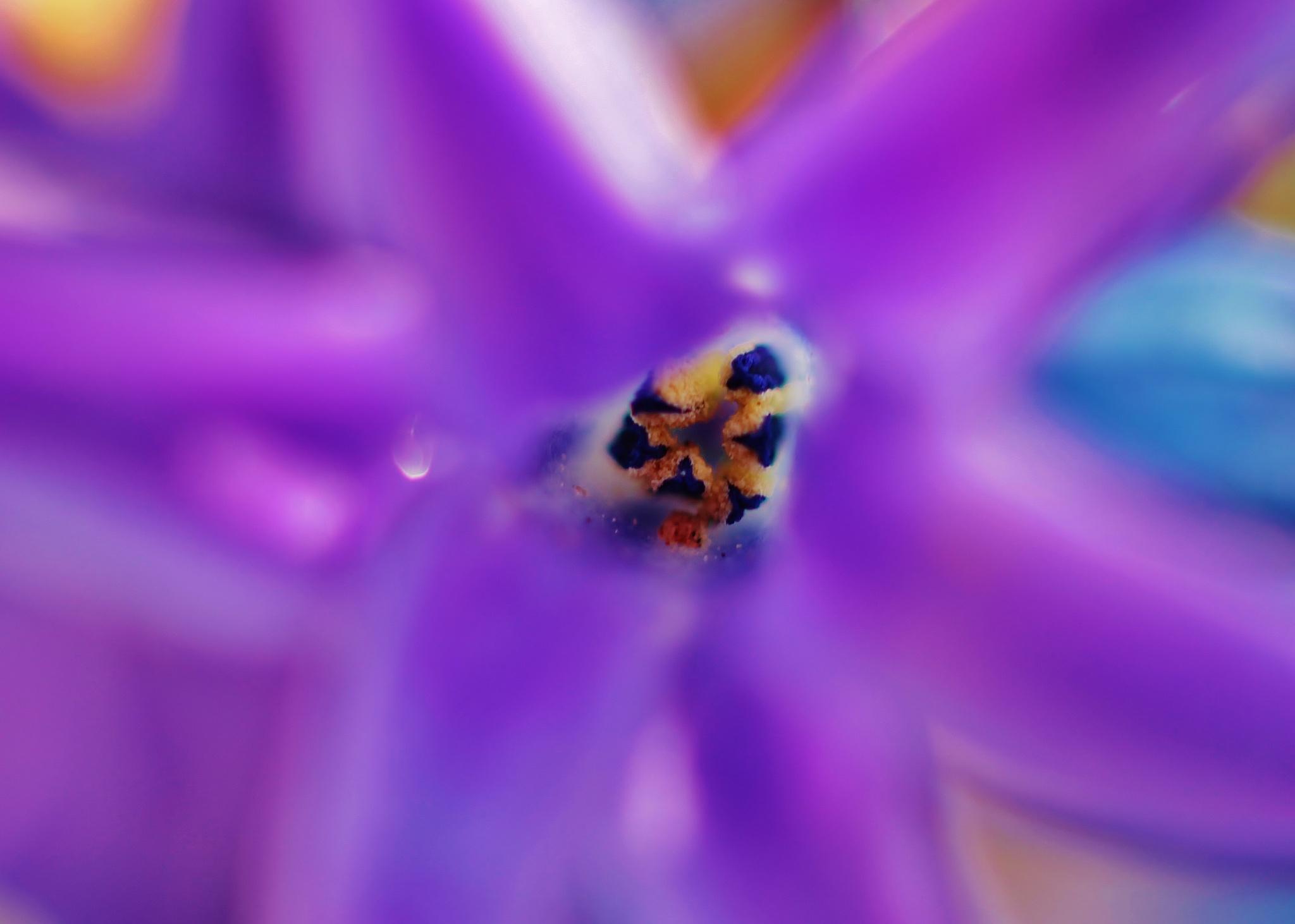 Coeur de fleur 2,, by Liborio Drogo