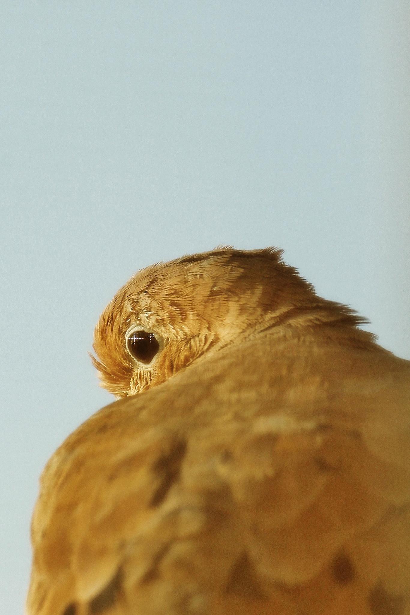 Morning bird on my fire escape, by Liborio Drogo